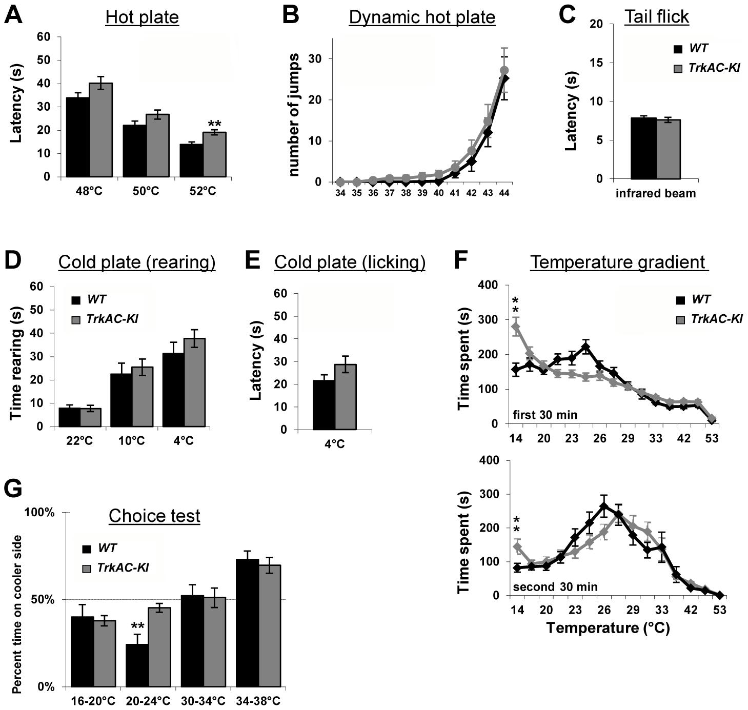 Abnormal temperature sensitivity in <i>TrkAC-KI</i> mice.