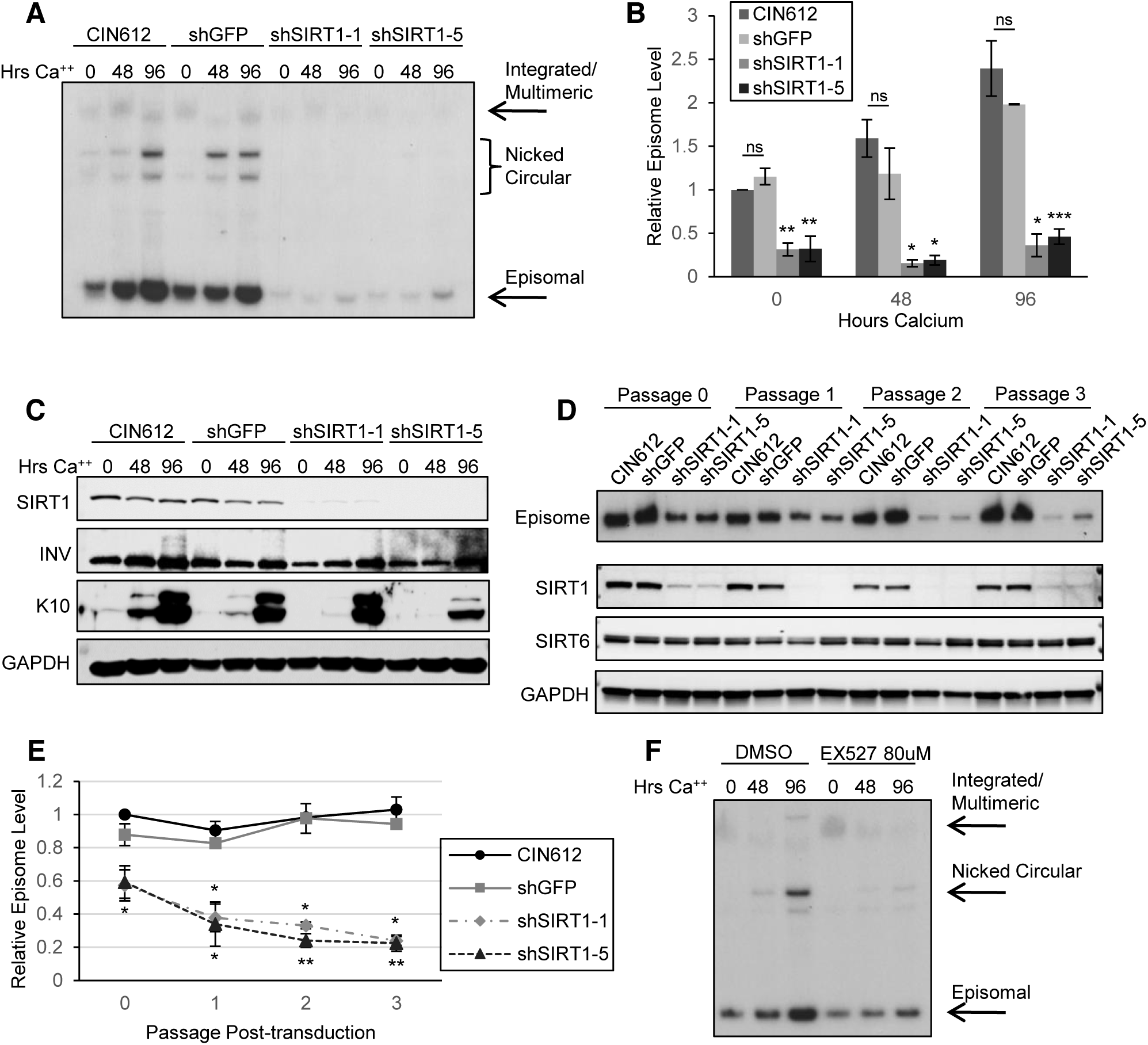 Depletion of SIRT1 by shRNA inhibits viral DNA replication and amplification