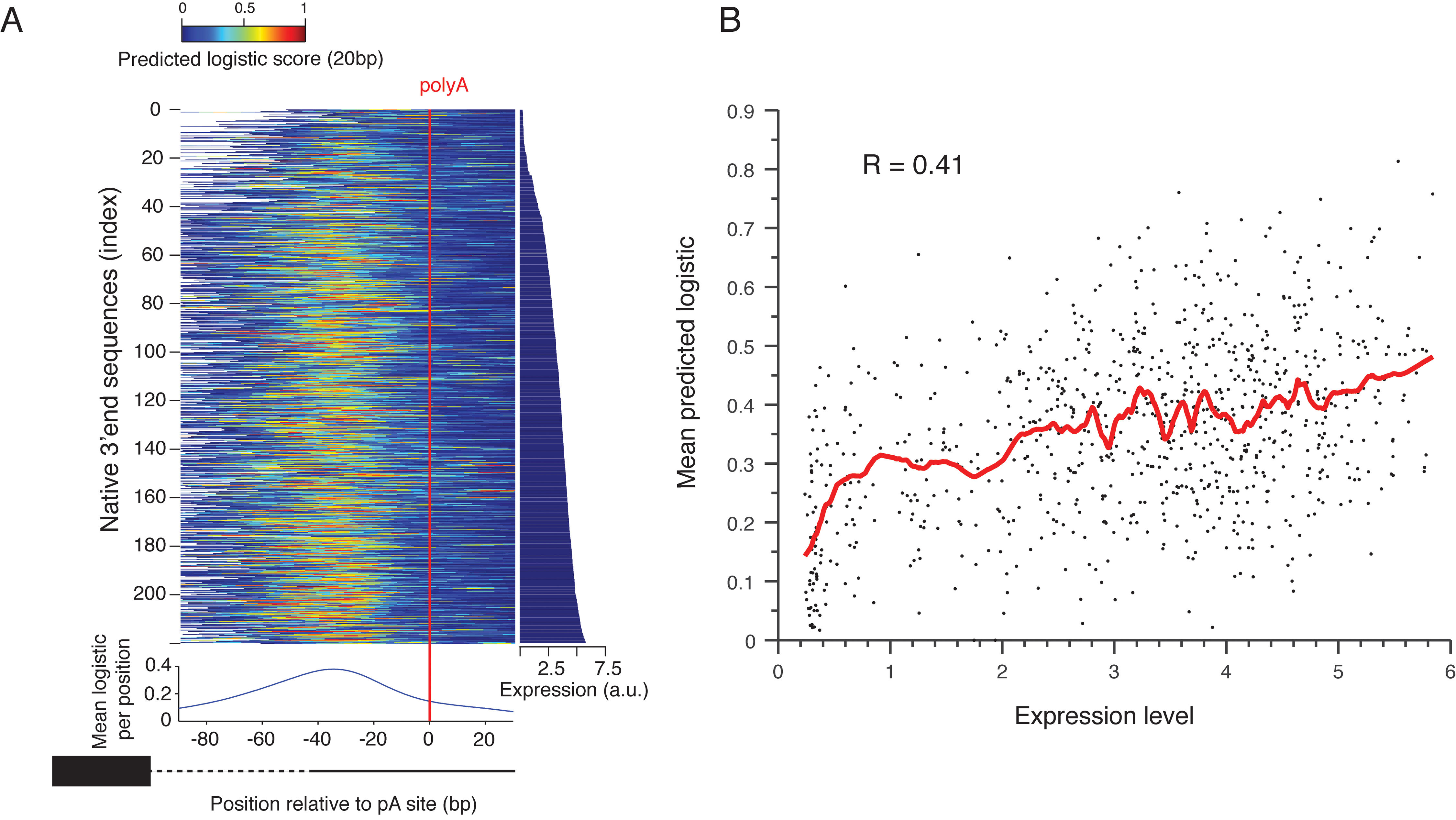 Prediction of polyadenylation signals in native sequences.