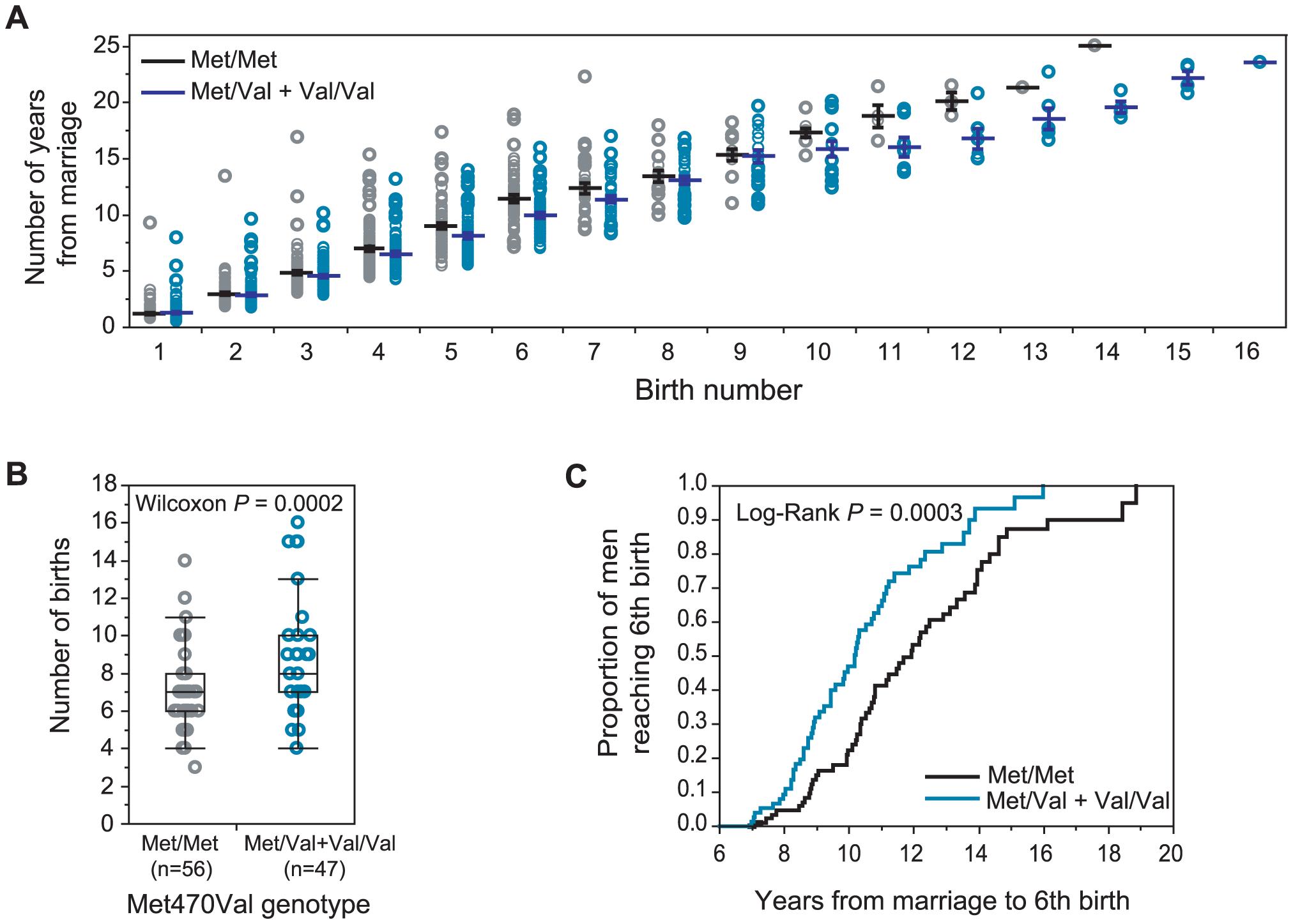 Met470Val genotypes and fertility in Hutterite men.