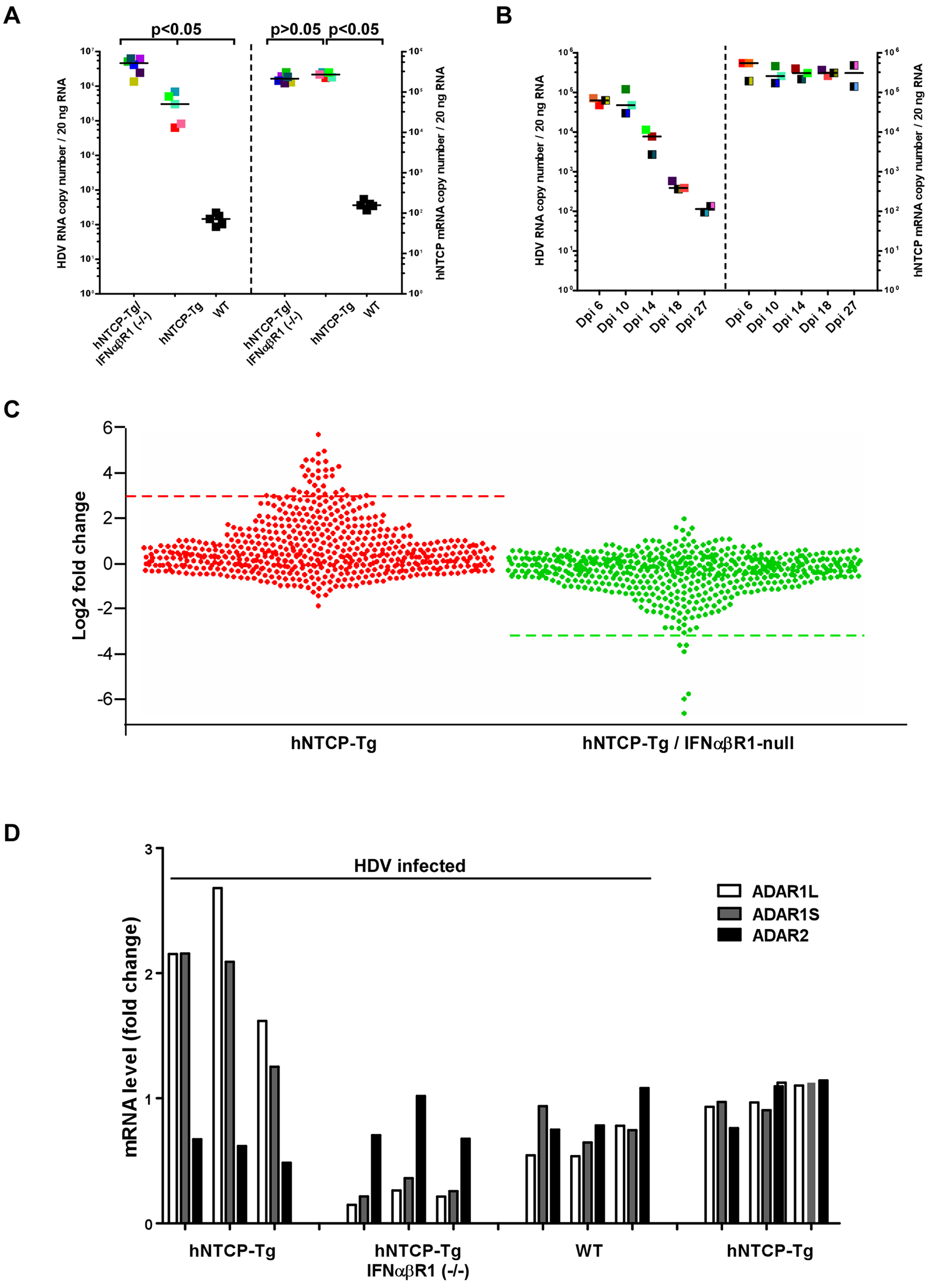 Human NTCP transgenic mice homozygous for IFNα/βR1-/- cleared HDV infection.