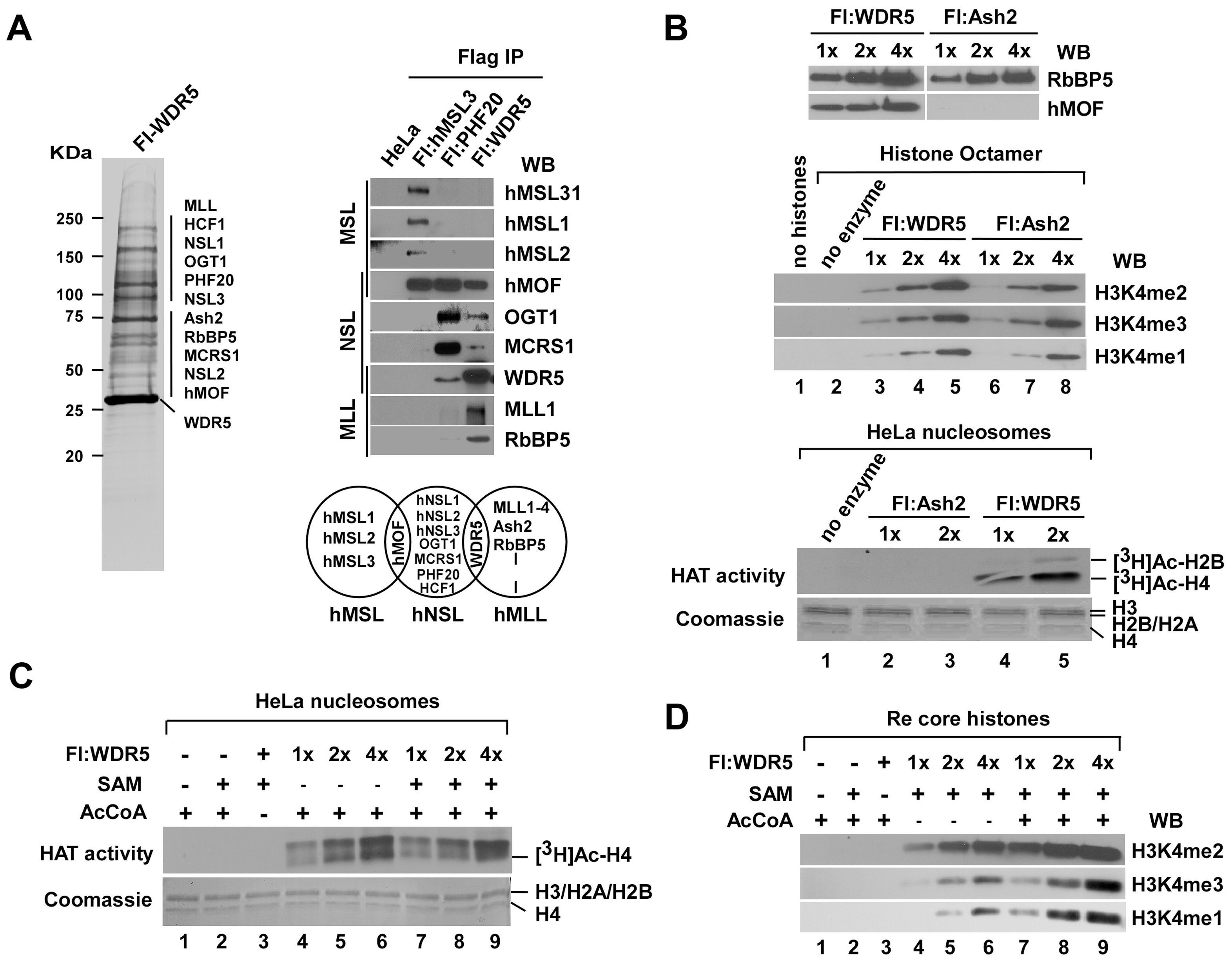 HAT activity facilitates histone H3K4 methylation by WDR5-containing complex <i>in vitro</i>.