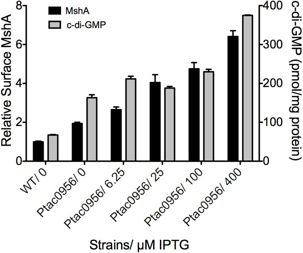 MshA pilus production correlates with c-di-GMP.