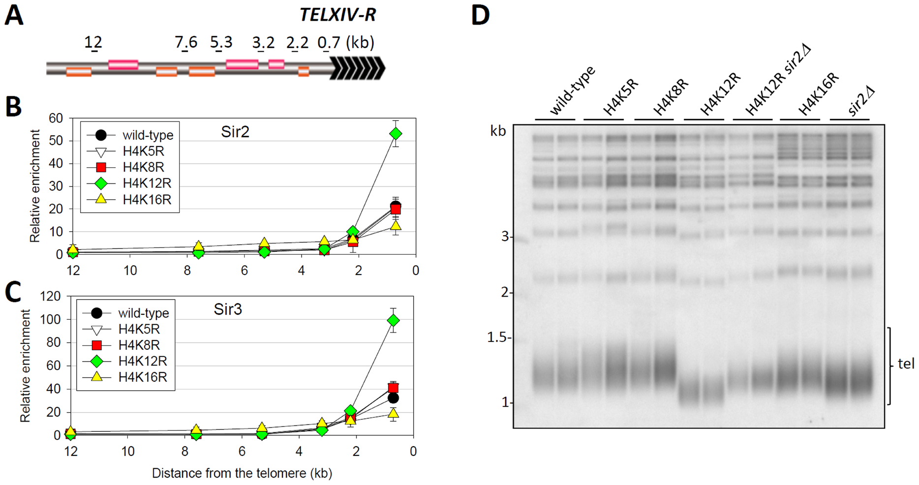 Regulation of telomere structure by histone H4K12 acetylation.