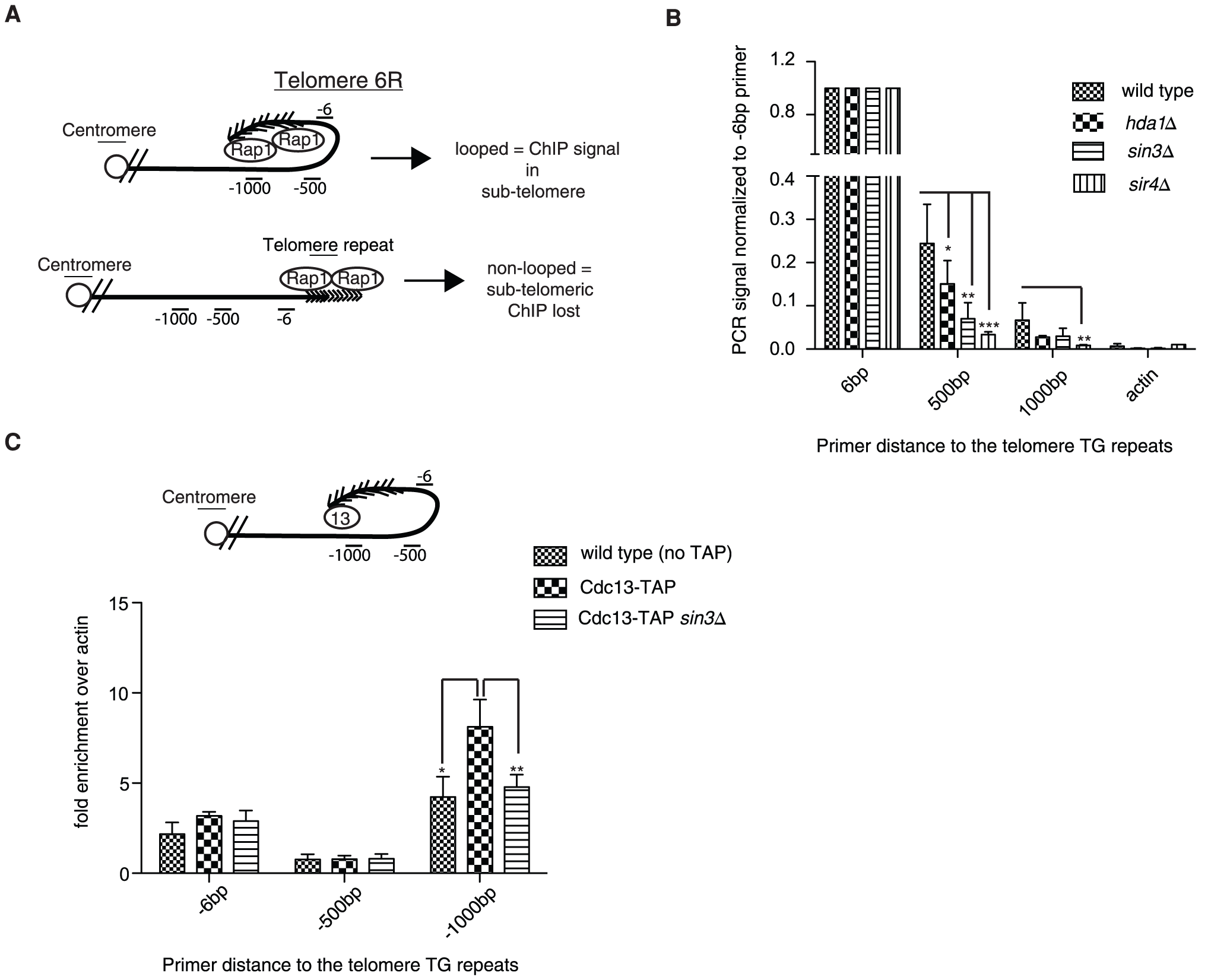 Chromatin immunoprecipitation confirms structural defects.