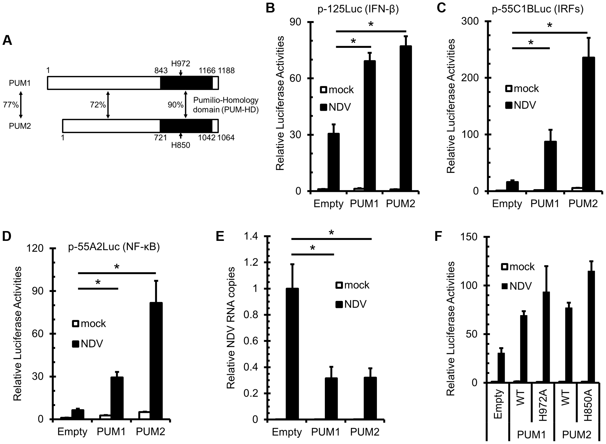 Overexpression of PUM1 and PUM2 results in enhanced NDV-induced <i>IFNB</i> promoter activity.