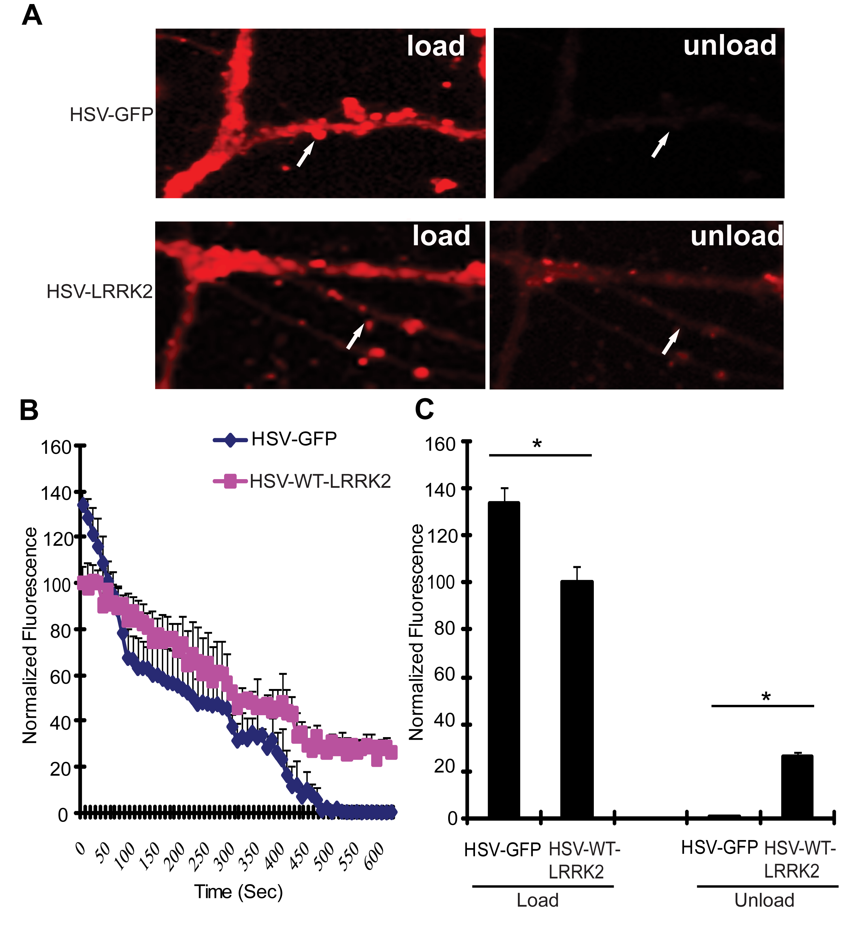 Expression of LRRK2 causes vesicular trafficking defects in neurons.
