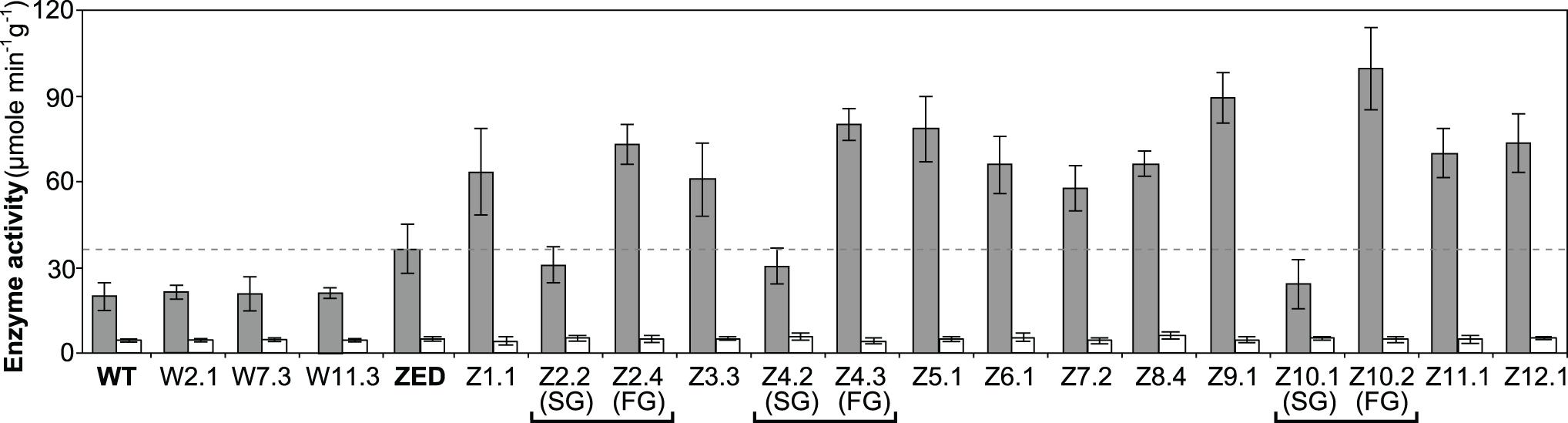 Transhydrogenase activity of <i>E</i>. <i>coli</i> WT, <i>E</i>. <i>coli</i> ZED, and evolved isolates.