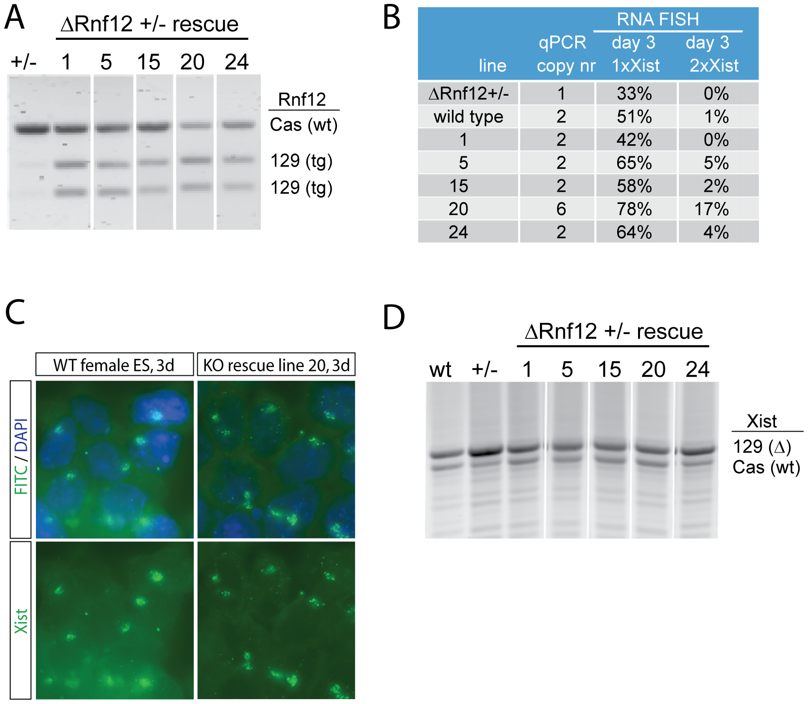 RNF12 activates X chromosome inactivation in <i>trans.</i>
