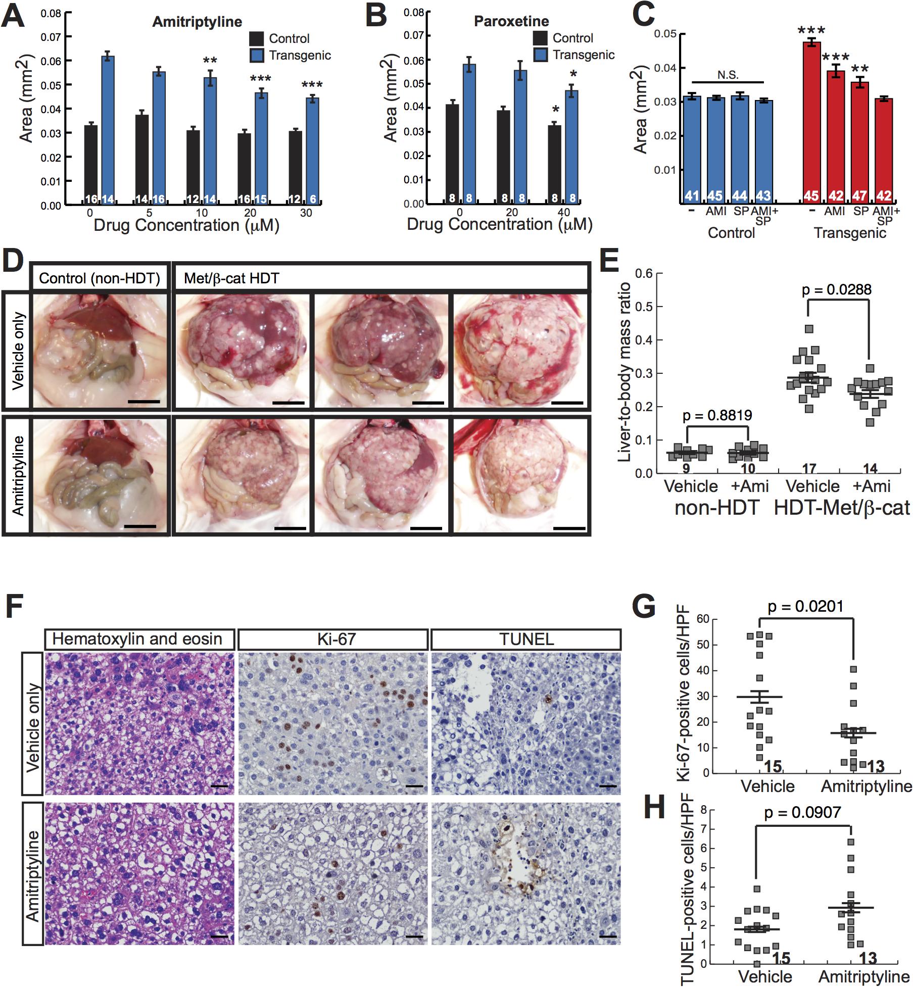 Antidepressants decrease β-catenin-induced liver enlargement and tumorigenesis.