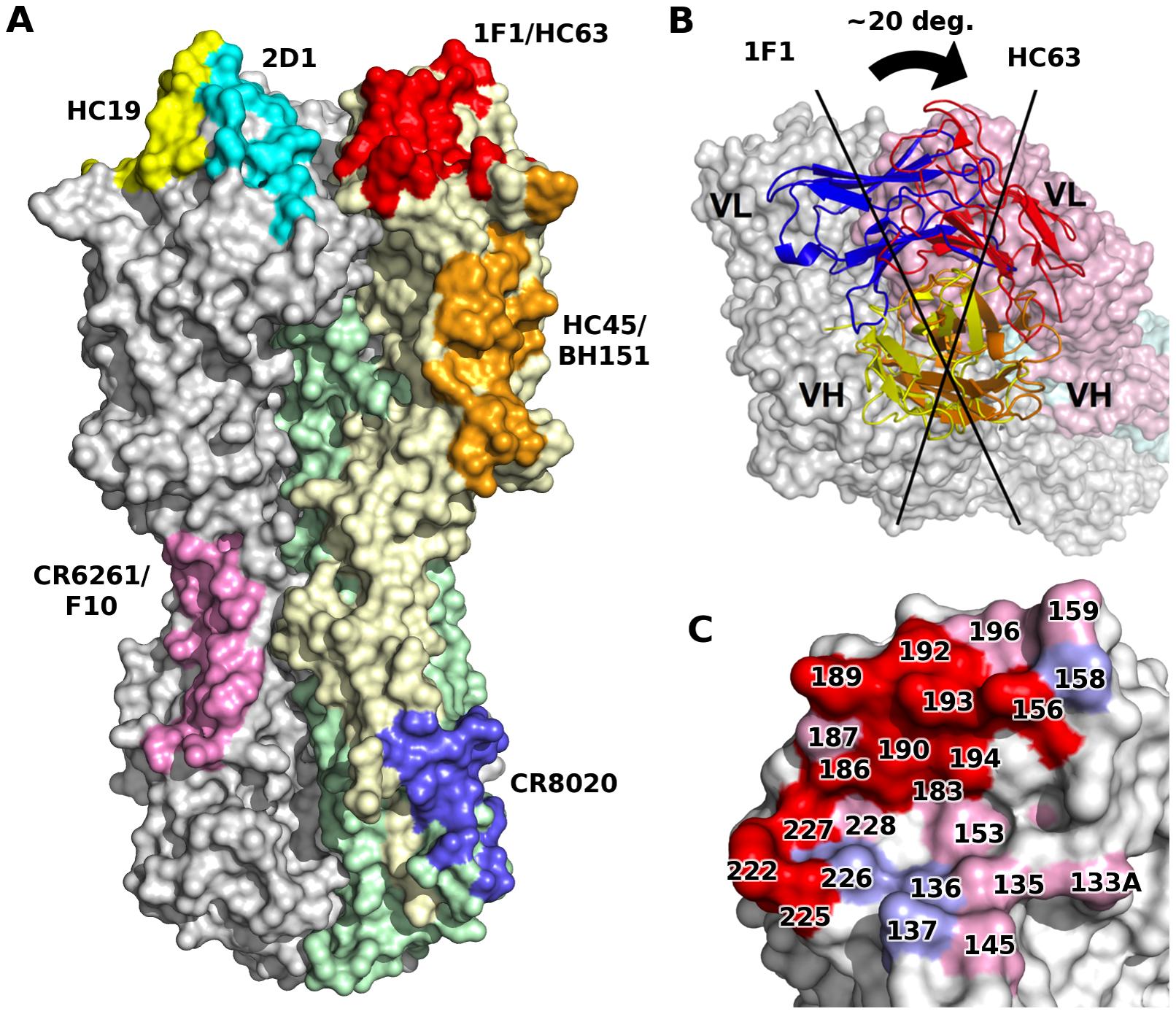 1F1 and HC63 exhibit similar HA binding modes.