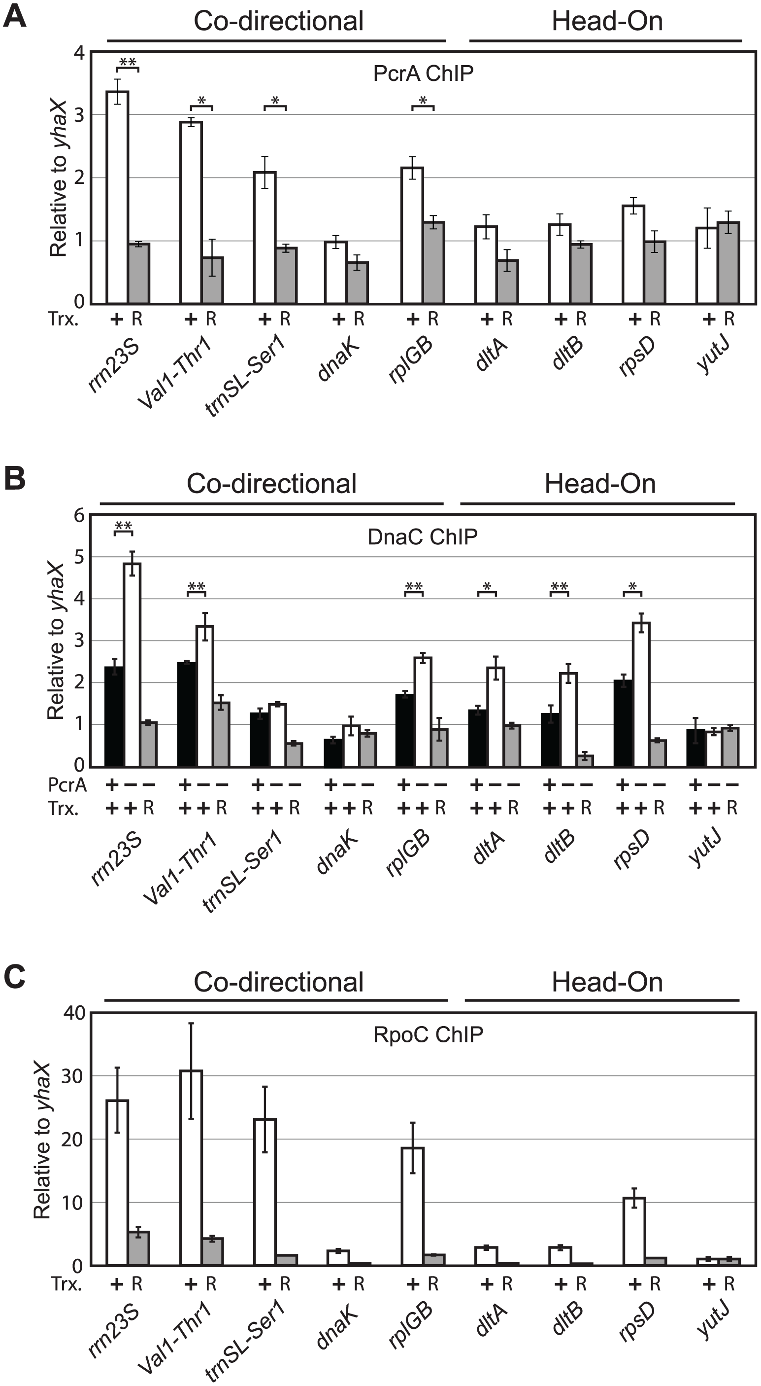 PcrA and DnaC association with specific chromosomal regions are transcription-dependent and correlate with RpoC association.