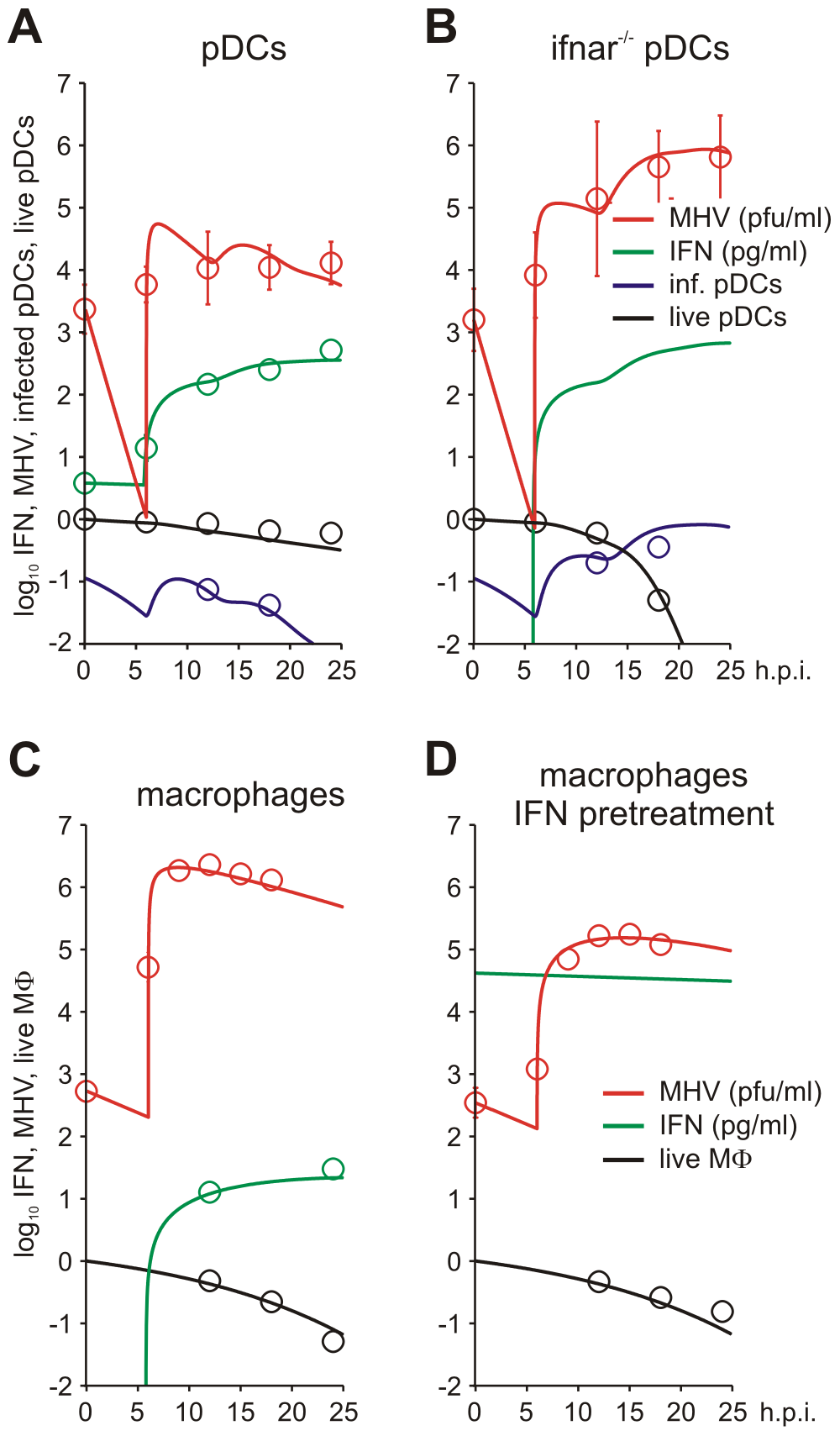 MHV infection and IFN response kinetics in vitro.