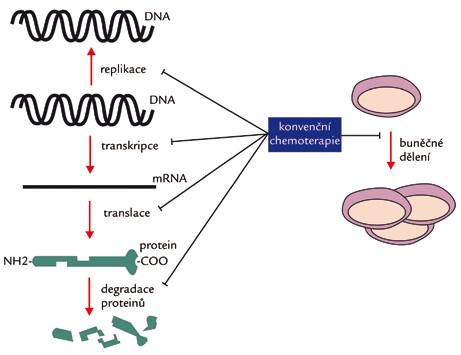 Mechanizmus účinku konvenčních cytostatik.