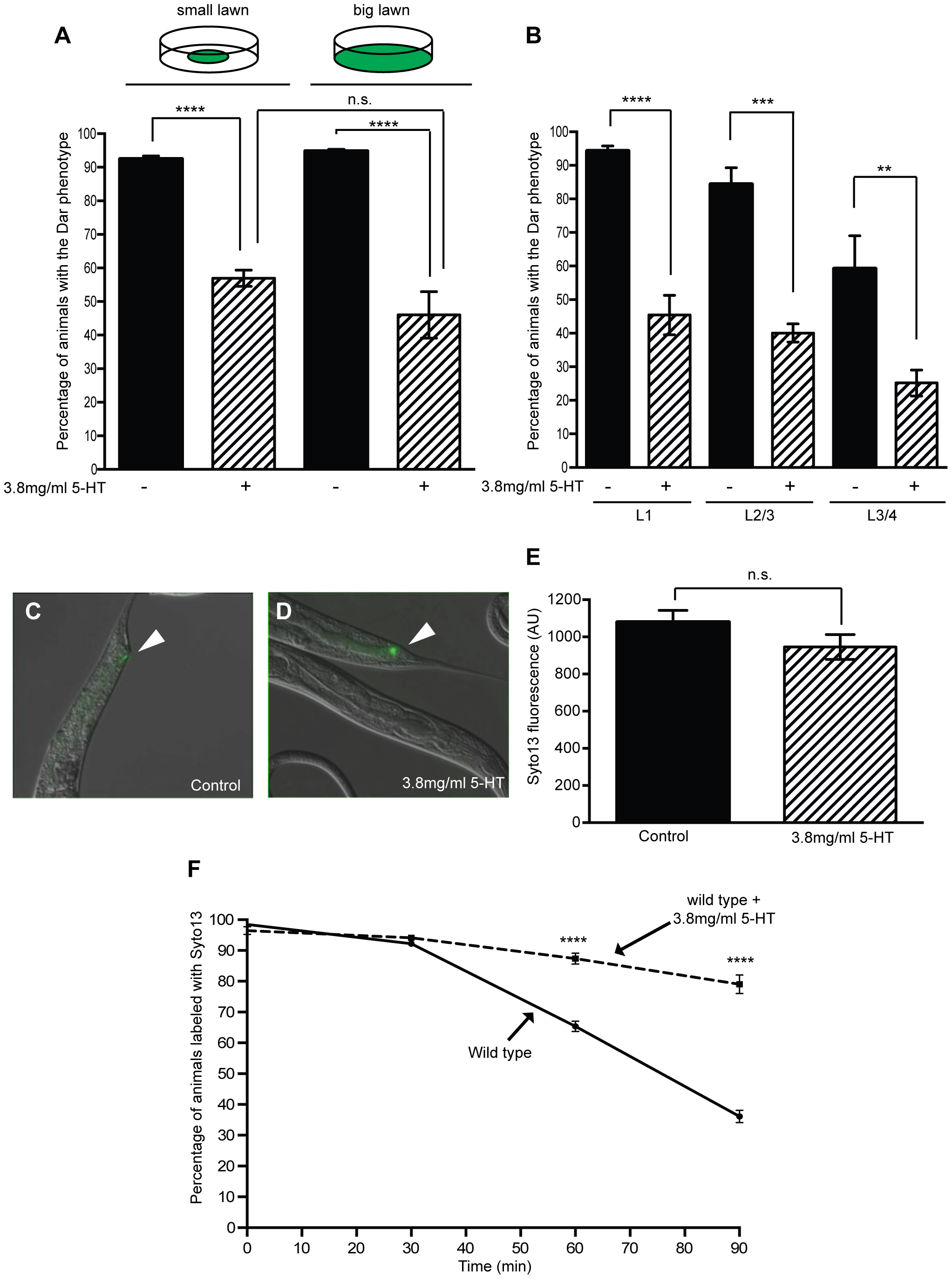 Exogenous serotonin inhibits the Dar phenotype and decreases pathogen clearance rates.
