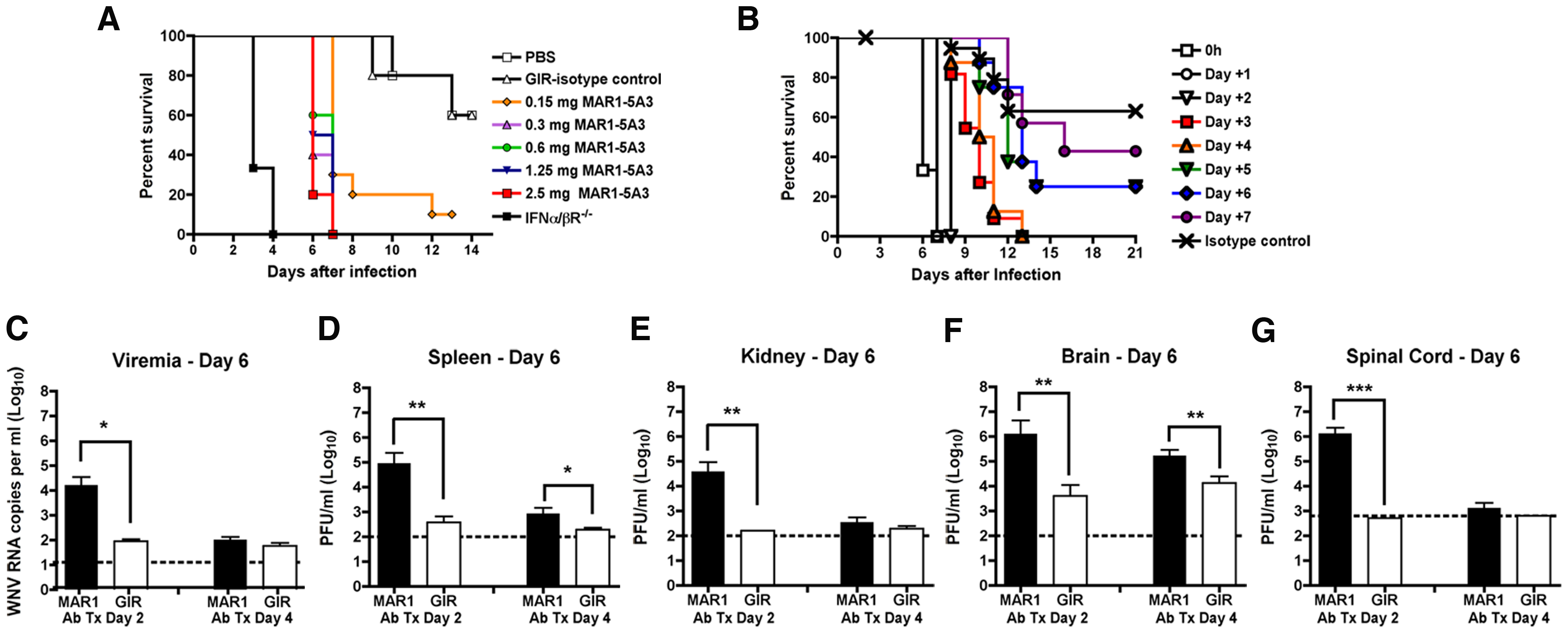 Effect of blockade of type I IFN signaling on WNV-NY infection.