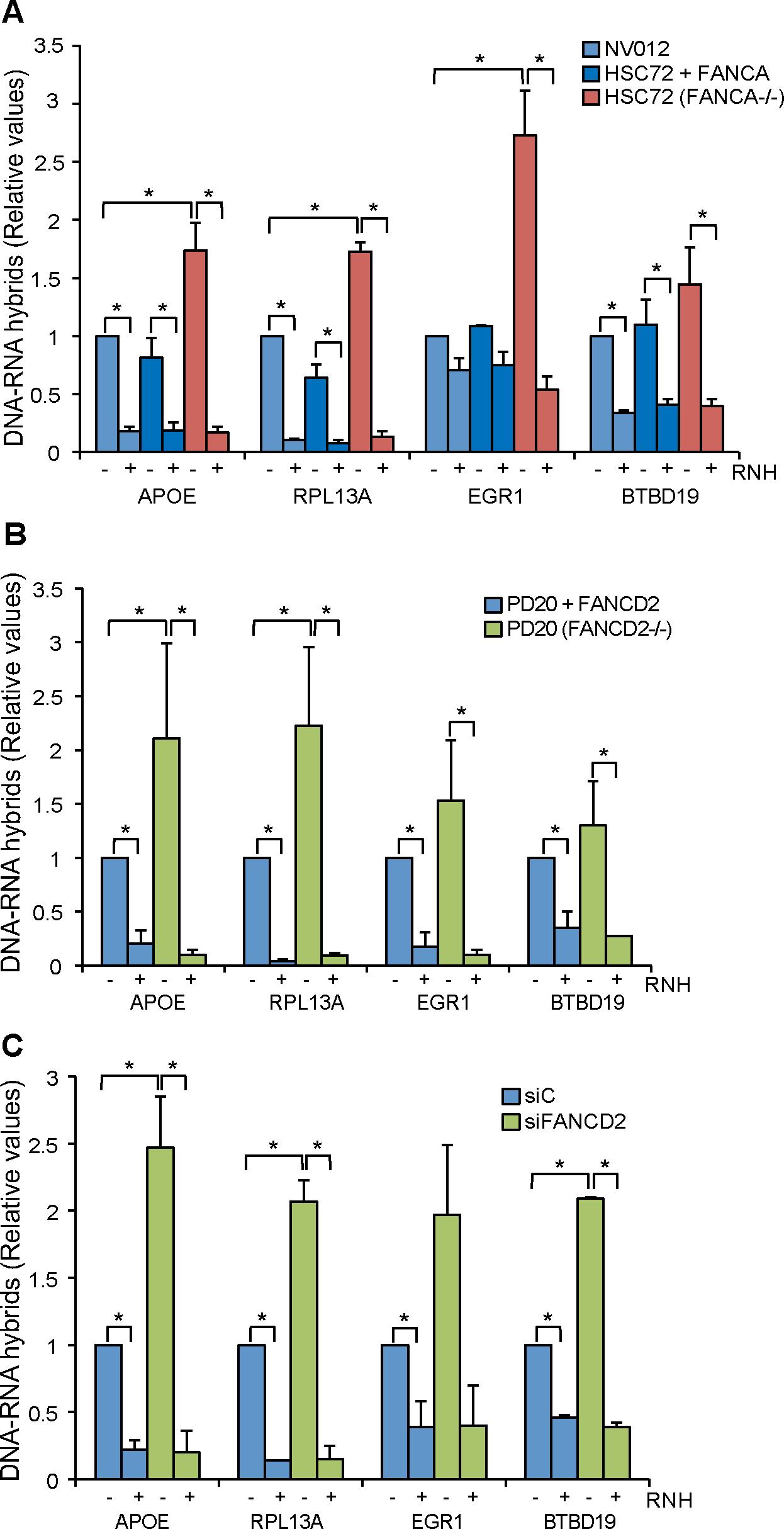 R loop accumulation in Fanconi Anemia-deficient patient cells.