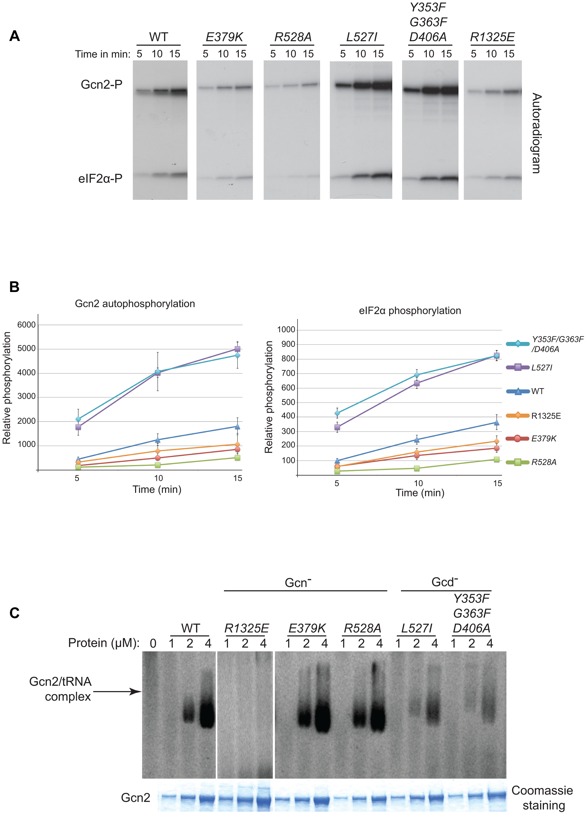 Effect of YKD substitutions on kinase activity and tRNA binding by purified Gcn2 <i>in vitro</i>.