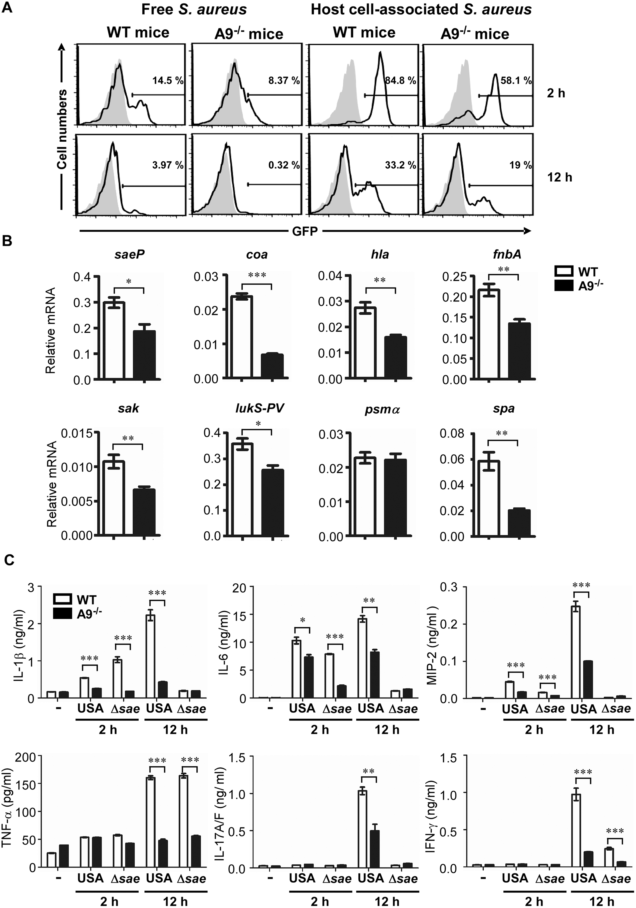 CP enhances the activity of the SaeRS TCS and cytokine production in mice.