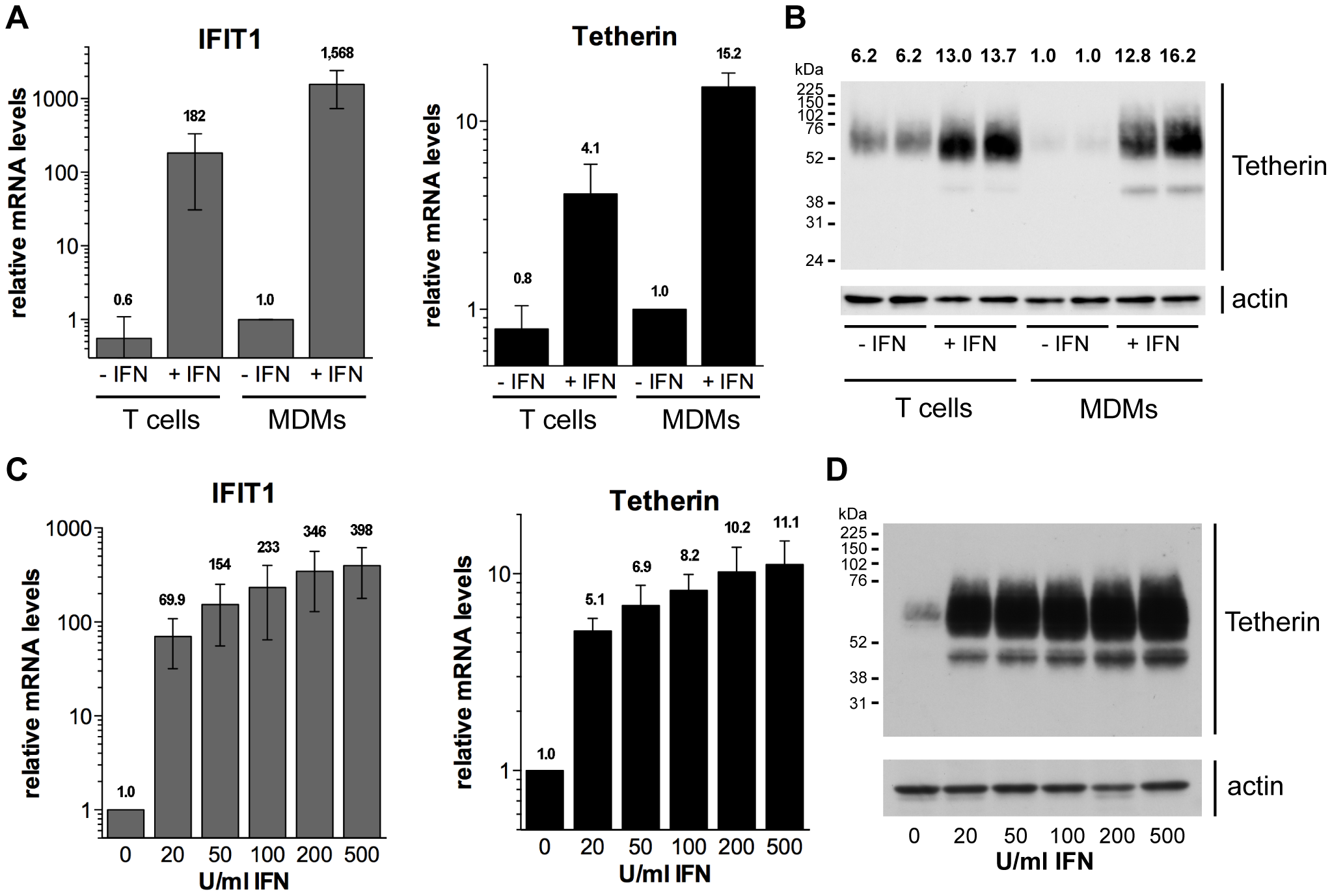 Type I interferons upregulate Tetherin expression in primary macrophages.