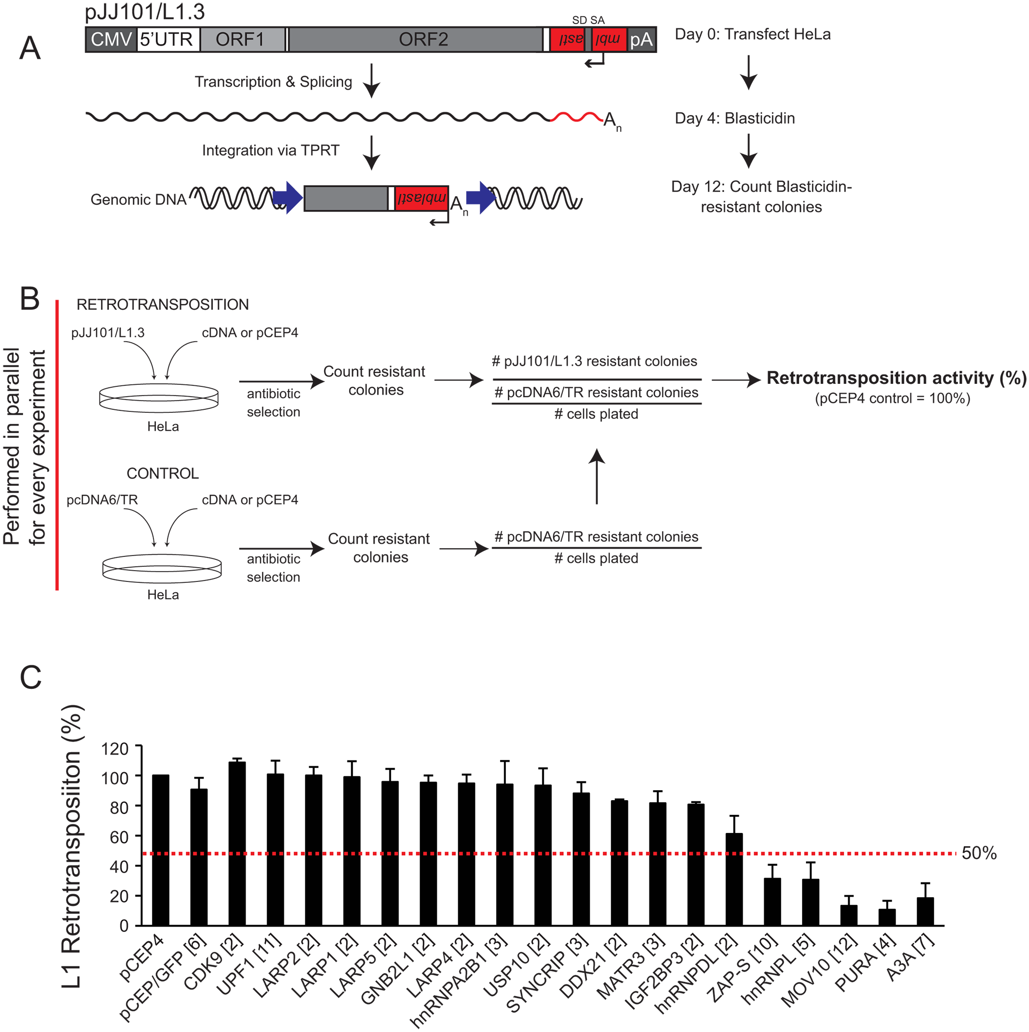 Several of the ORF1p-FLAG interacting proteins inhibit L1 retrotransposition.