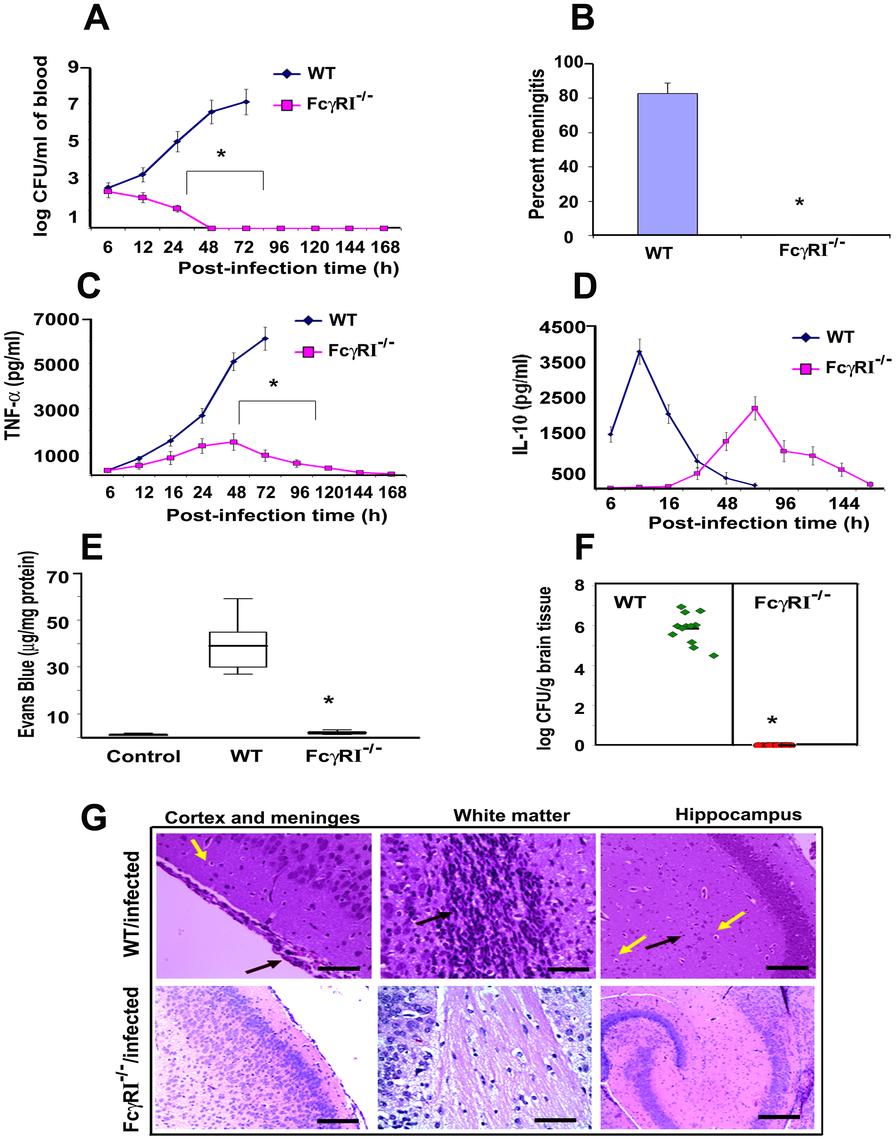 FcγRIa<sup>−/−</sup> mice are resistant to <i>E. coli</i> K1 induced meningitis.