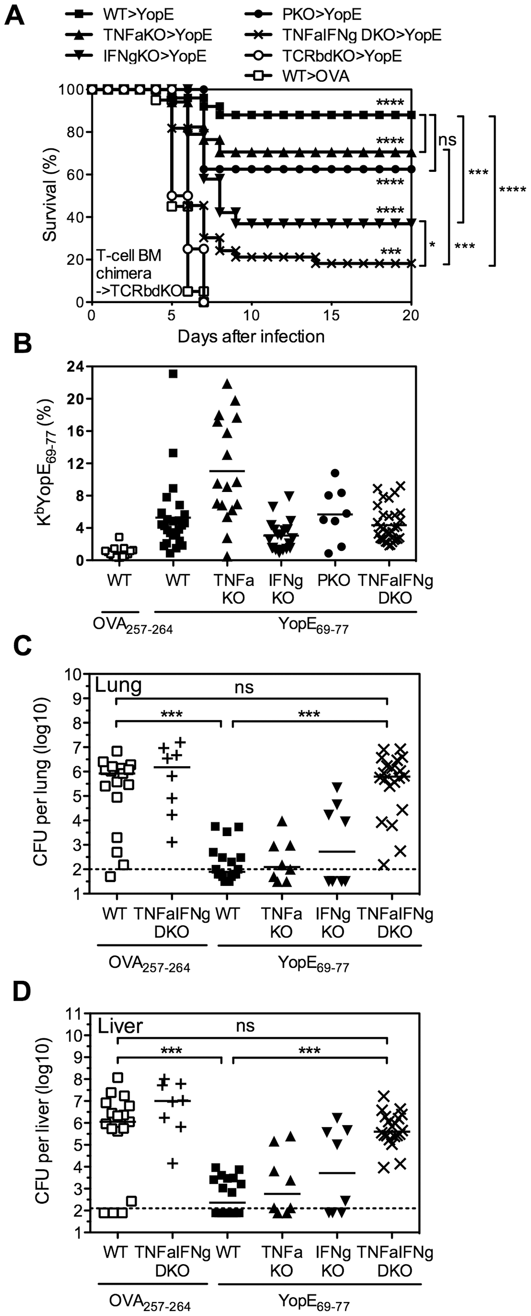 YopE<sub>69–77</sub>-specific CD8 T cells lacking the capacity to produce TNFα and IFNγ fail to protect mice and control bacterial burden.