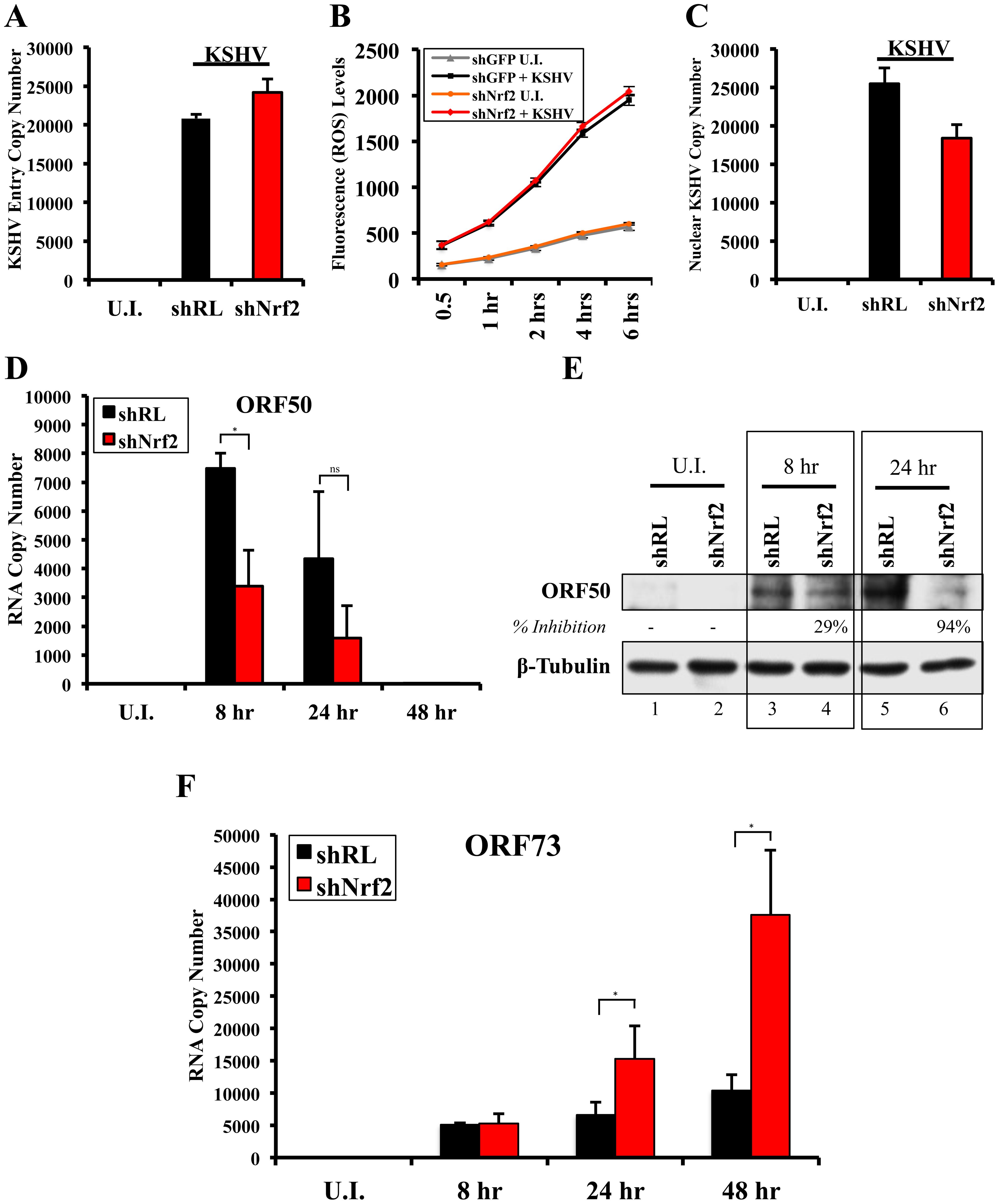 Effect of Nrf2 modulation on KSHV biology.