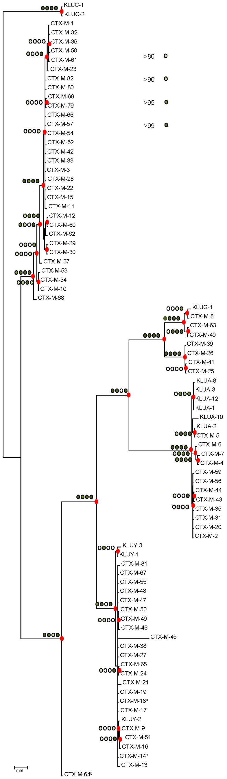 Phylogenetic tree of <i>bla</i><sub>CTX-M</sub> sequences (n = 73) inferred by Bayesian analysis.