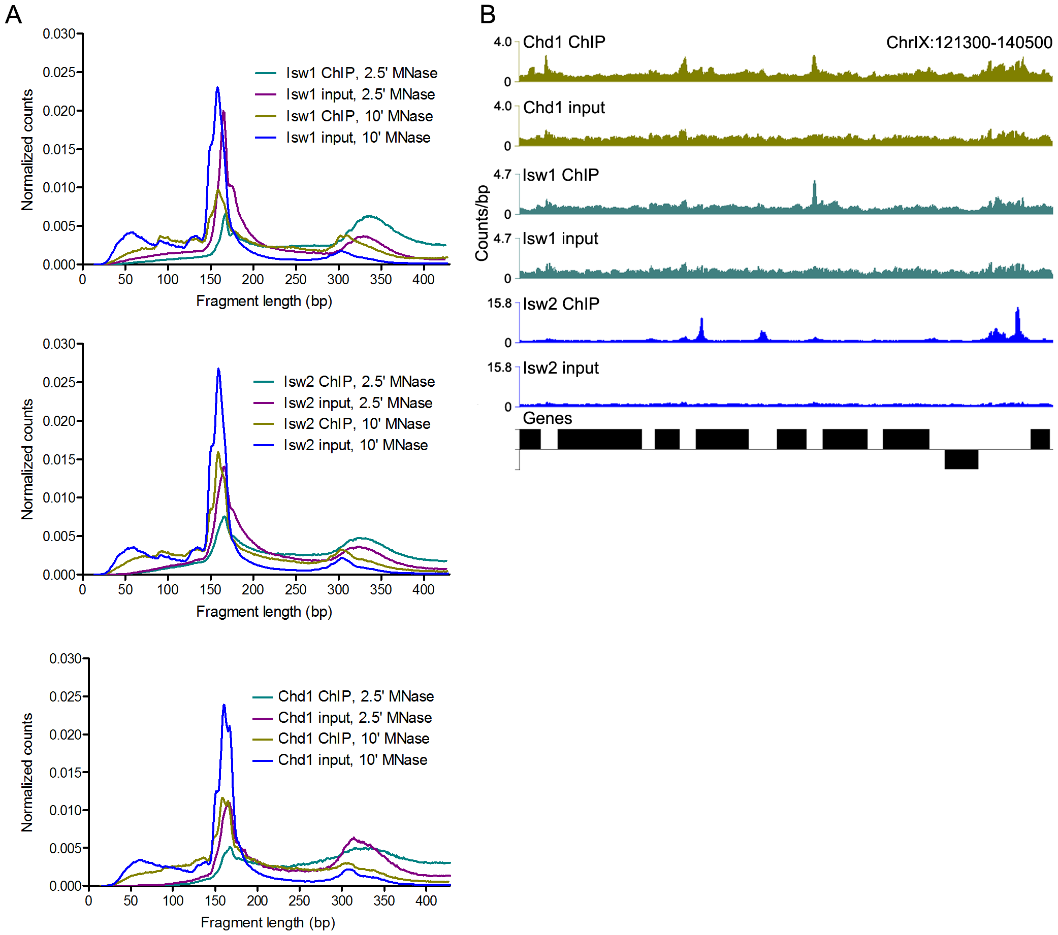 N-ChIP-seq localizes ISWI and CHD remodelers throughout the genome.