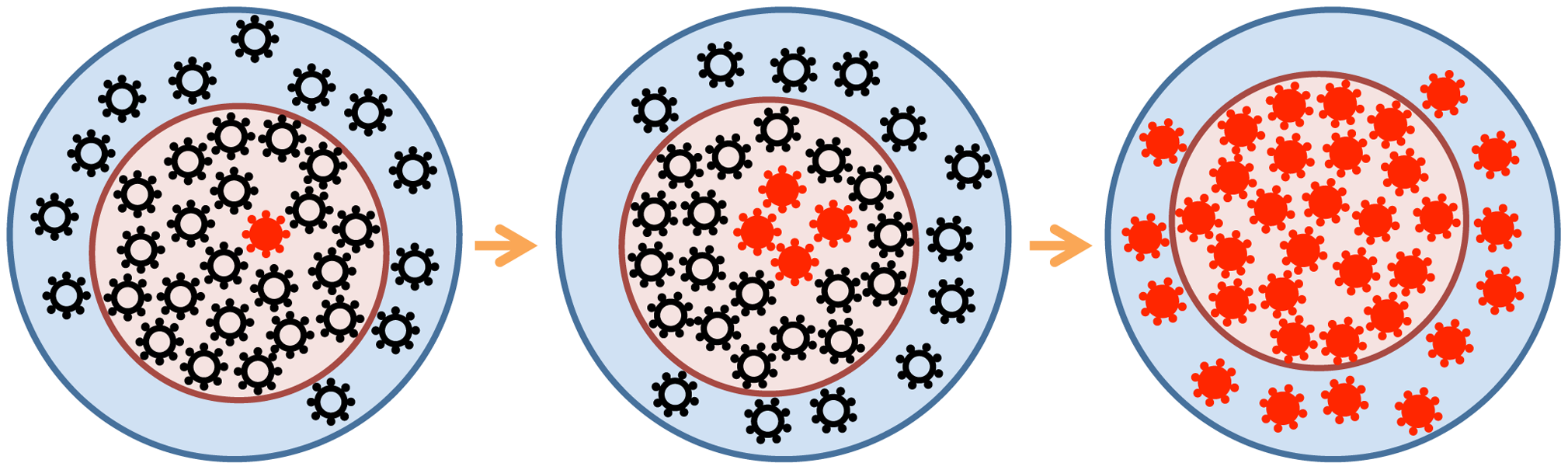 """Beneficial viral mutants (red) arise in the """"effective"""" virus subpopulation (<i>N</i><sub>eff</sub>, pink circle) and spread gradually to the entire """"census"""" population (blue circle)."""