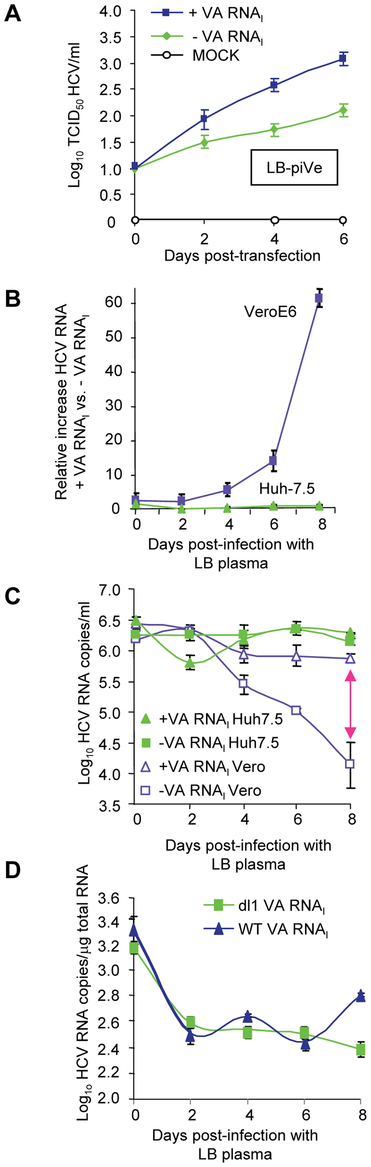 VA RNA<sub>I</sub> stimulates replication of HCV and increases RNA stability.