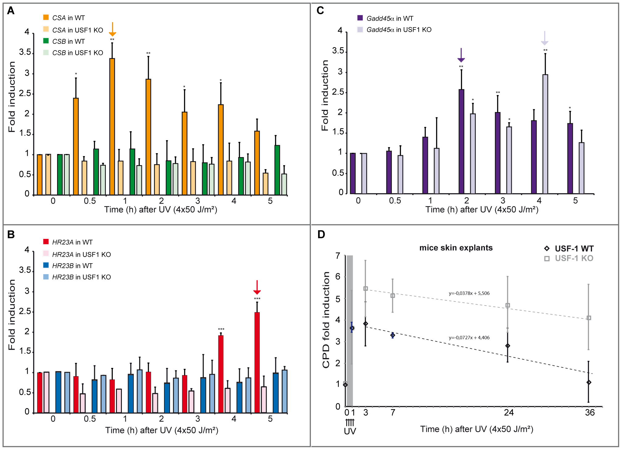 UV-induced <i>CSA</i> and <i>HR23A</i> expression is impaired in <i>USF-1</i> knock-out (KO) mice.