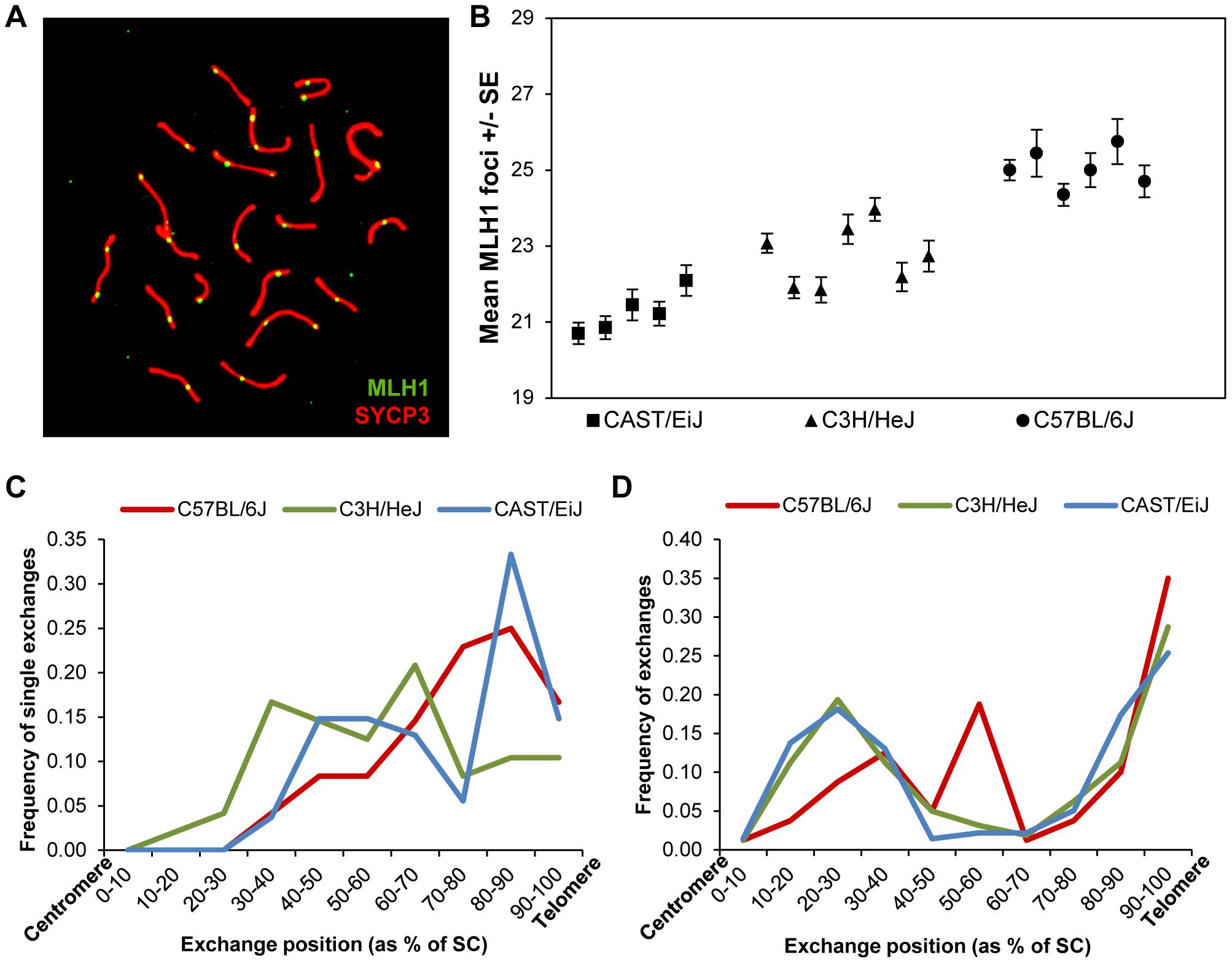 Inter-strain variation in mean MLH1 values.