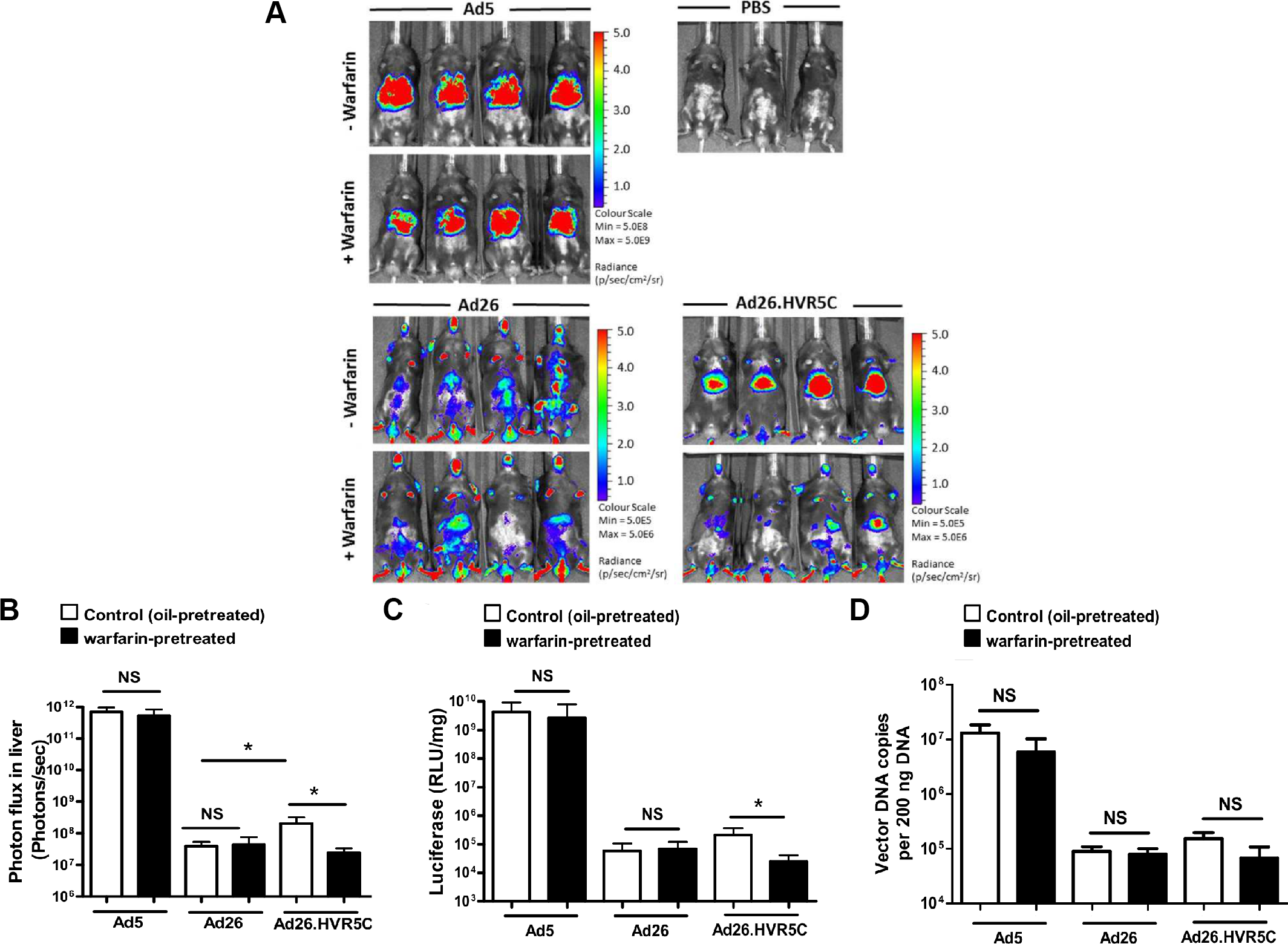 <i>In vivo</i> analysis of Ad26.HVR5C biodistribution in immune deficient mice.