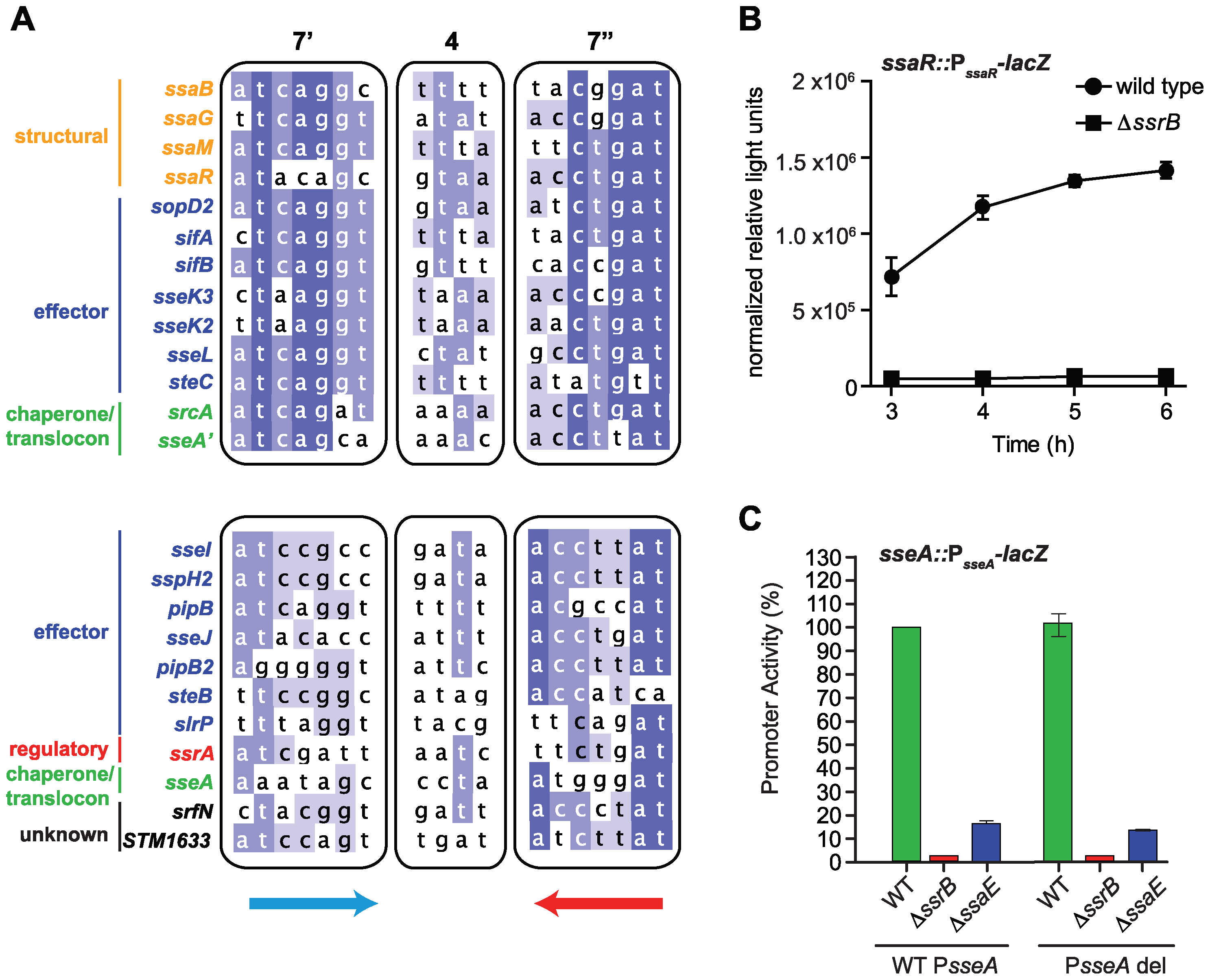 Genome-wide identification of SsrB palindrome sequences.