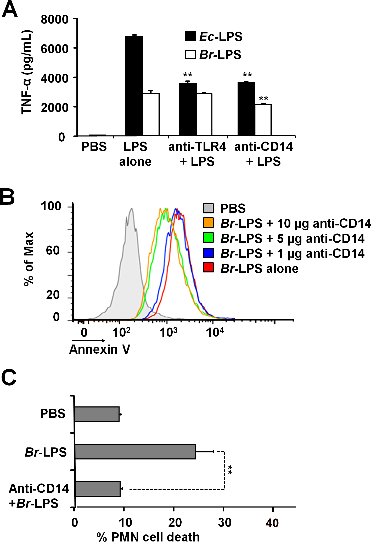 Neutralization of CD14 protects against <i>Br-</i>LPS-induced PMN cell death.