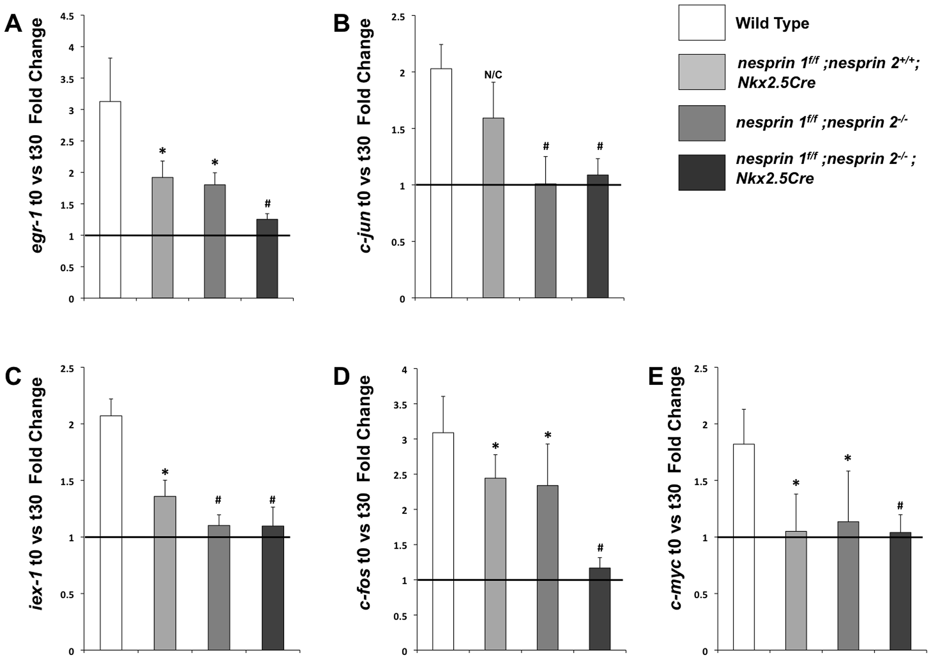 Examination of biomechanical gene response in isolated neonatal cardiomyocytes from Wild Type, <i>nesprin 1<sup>f/f</sup>;nesprin 2<sup>+/+</sup>; Nkx2.5Cre</i>, <i>nesprin 1<sup>f/f</sup>;nesprin 2<sup>−/−</sup></i> or <i>nesprin 1<sup>f/f</sup>;nesprin 2<sup>−/−</sup>;Nkx2.5Cre hearts</i>.