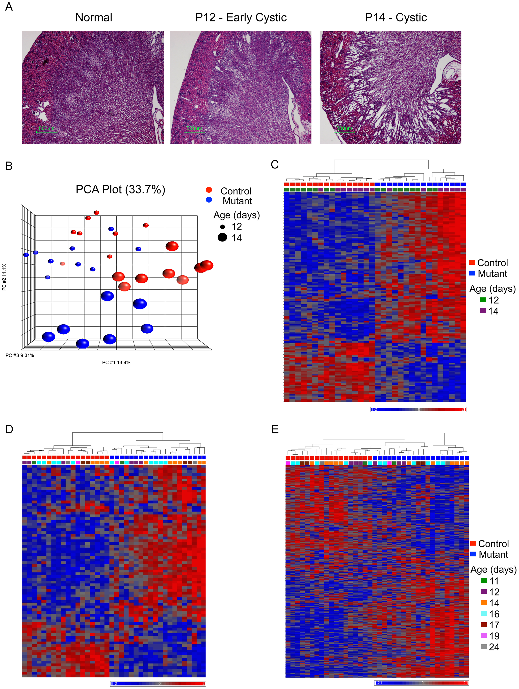 Histology and gene expression patterns in early-onset model.