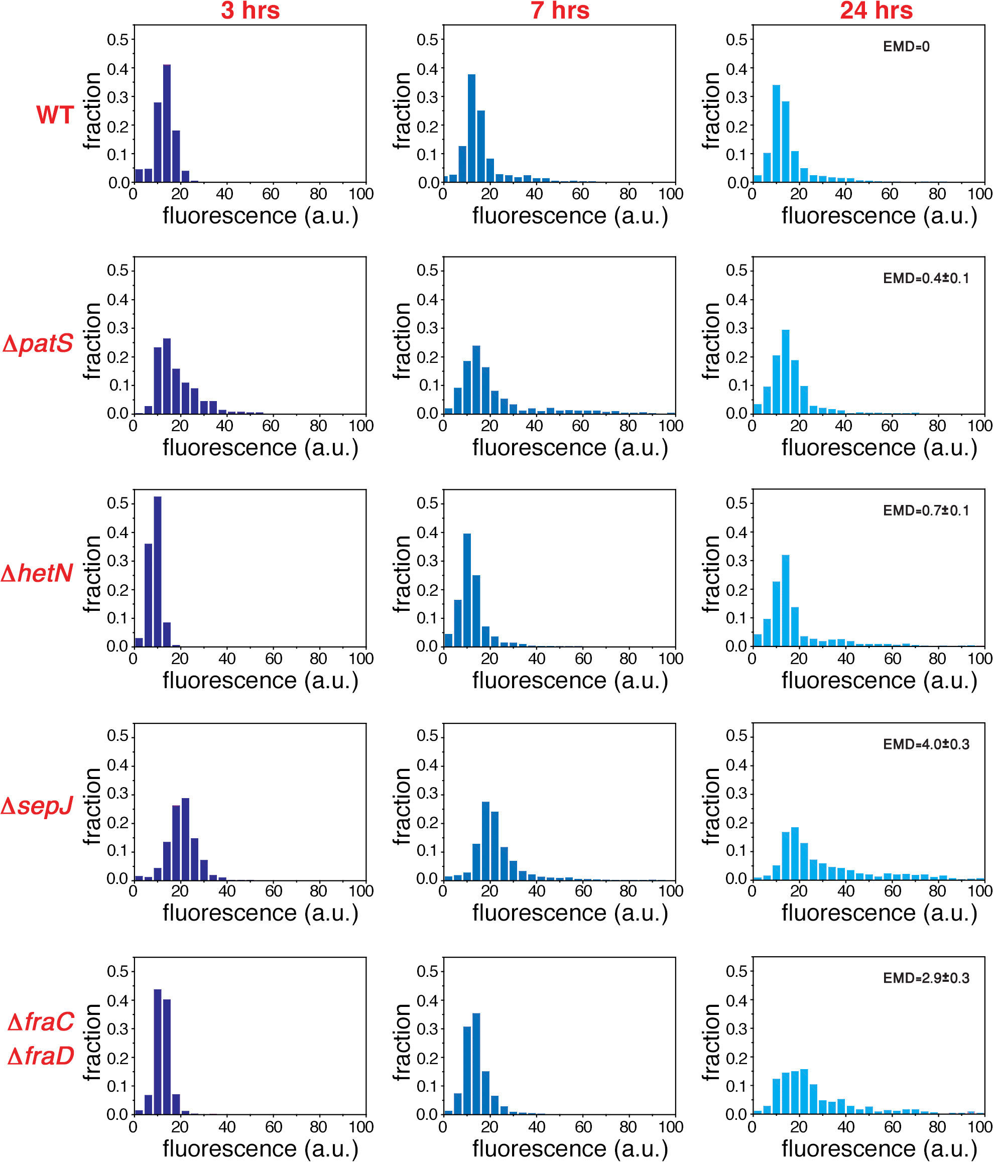 Non-stationary distributions of expression fluctuations of <i>hetR-gfp</i> following nitrogen deprivation build up from fluctuations under nitrogen-replete conditions.
