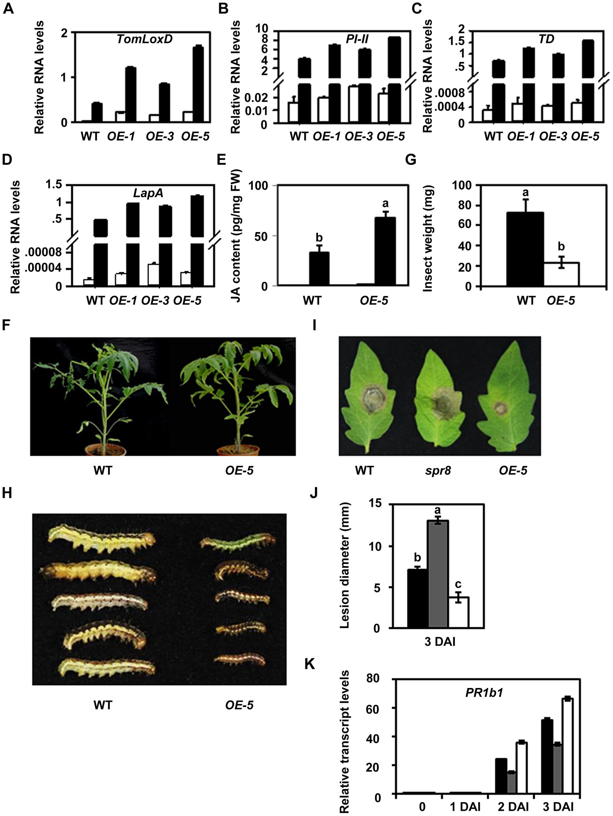 Resistance of <i>TomLoxD</i> overexpression plants to cotton bollworm larvae and <i>Botrytis cinerea</i>.