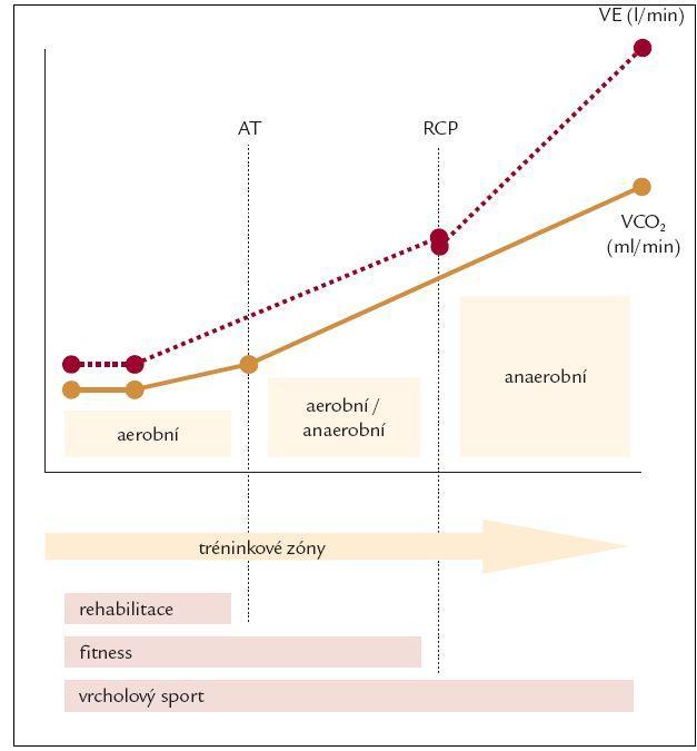 Vztah mezi plicní ventilací a zátěžovou intenzitou.