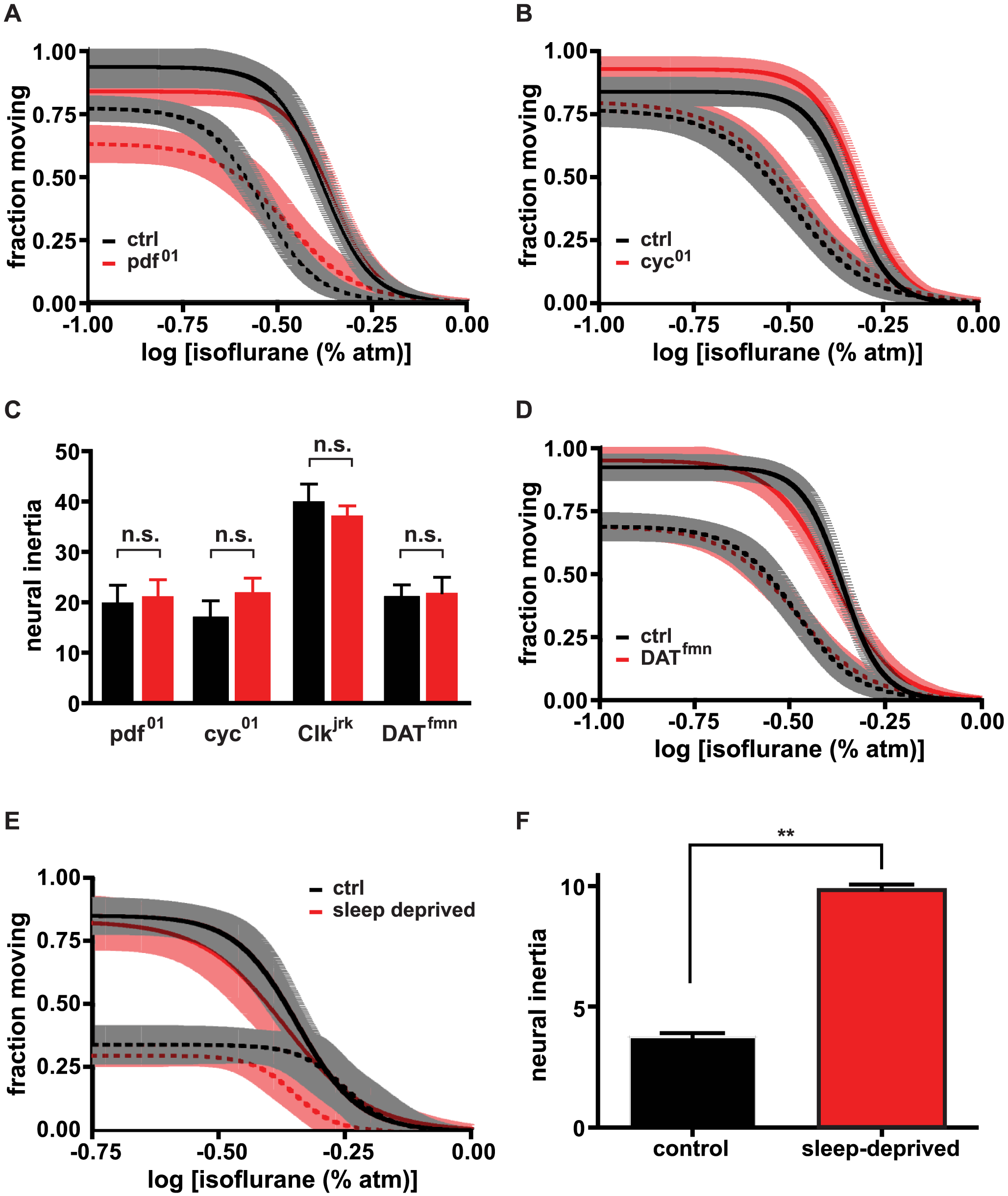 Neural inertia is affected by sleep homeostasis but not by mutations that exclusively impair non-homeostatic (baseline) sleep control or circadian clock function.