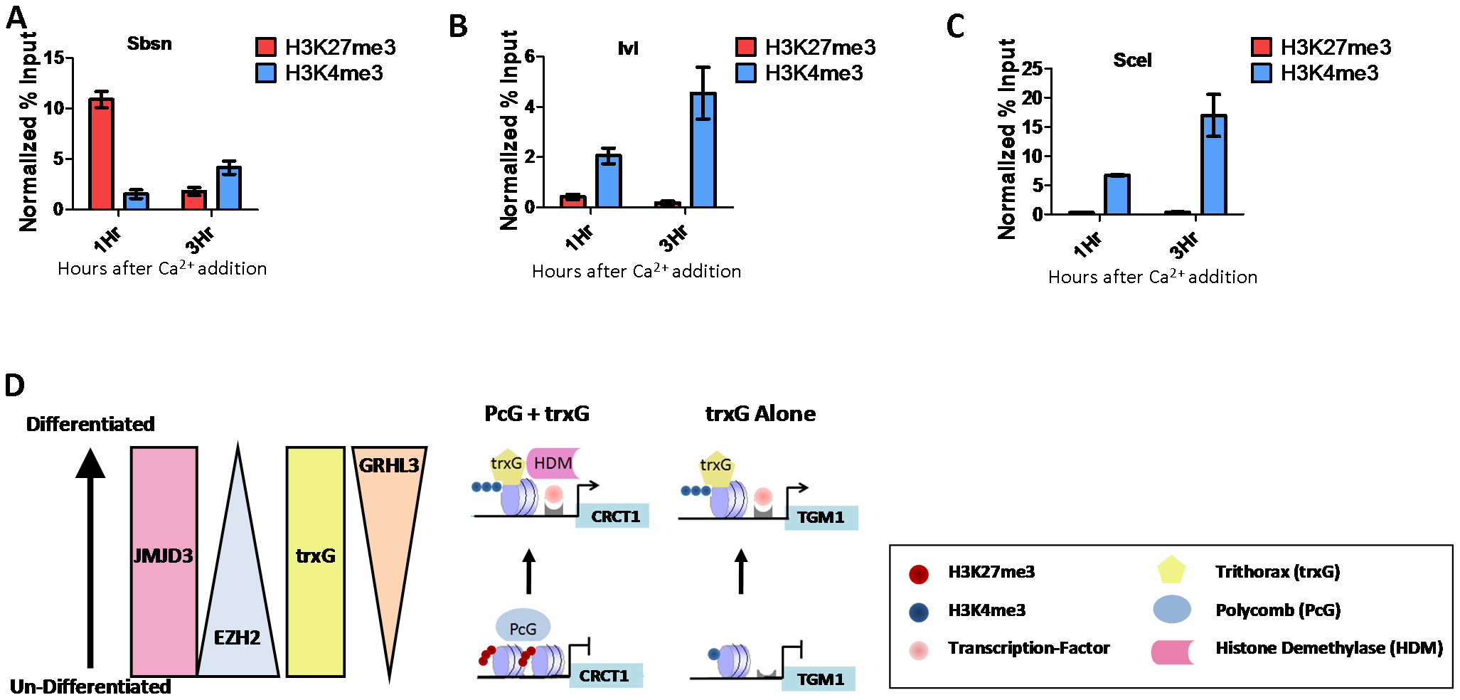 PcG and trxG regulation in epidermal differentiation.