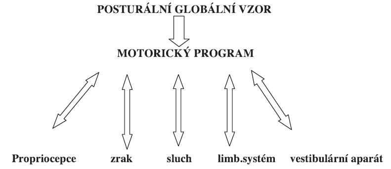 Schéma 1. Řízení posturálních reakcí.