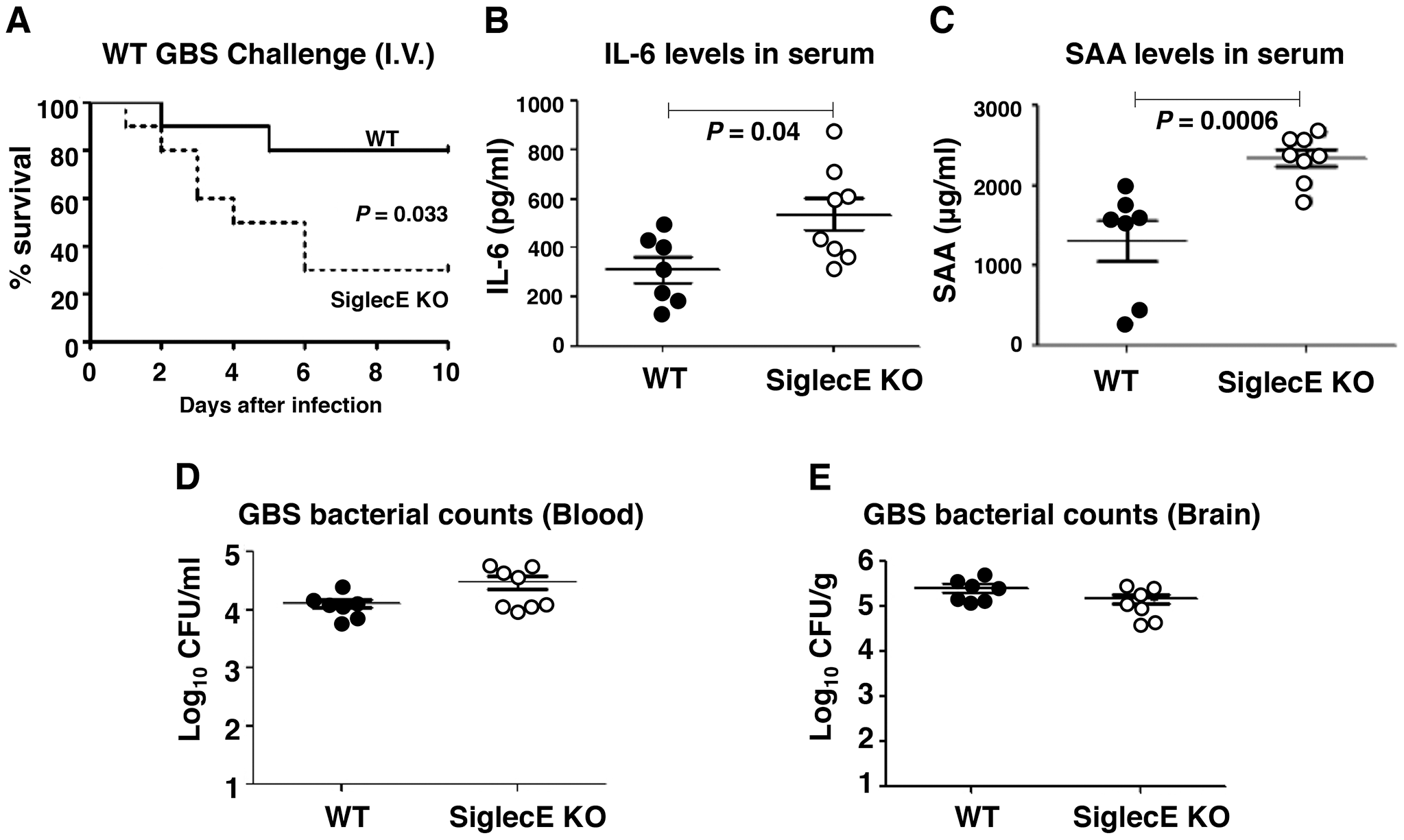 Absence of Siglec-E exacerbates inflammation and accelerates mortality in a systemic lethal dose GBS challenge.