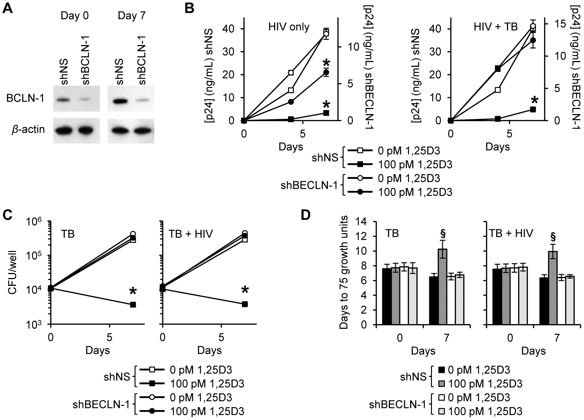 1,25D3 inhibition of HIV and <i>M. tuberculosis</i> is Beclin-1 dependent.