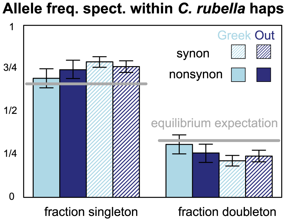 The allele frequency spectrum within <i>C. rubella</i>'s founding haplotypes.