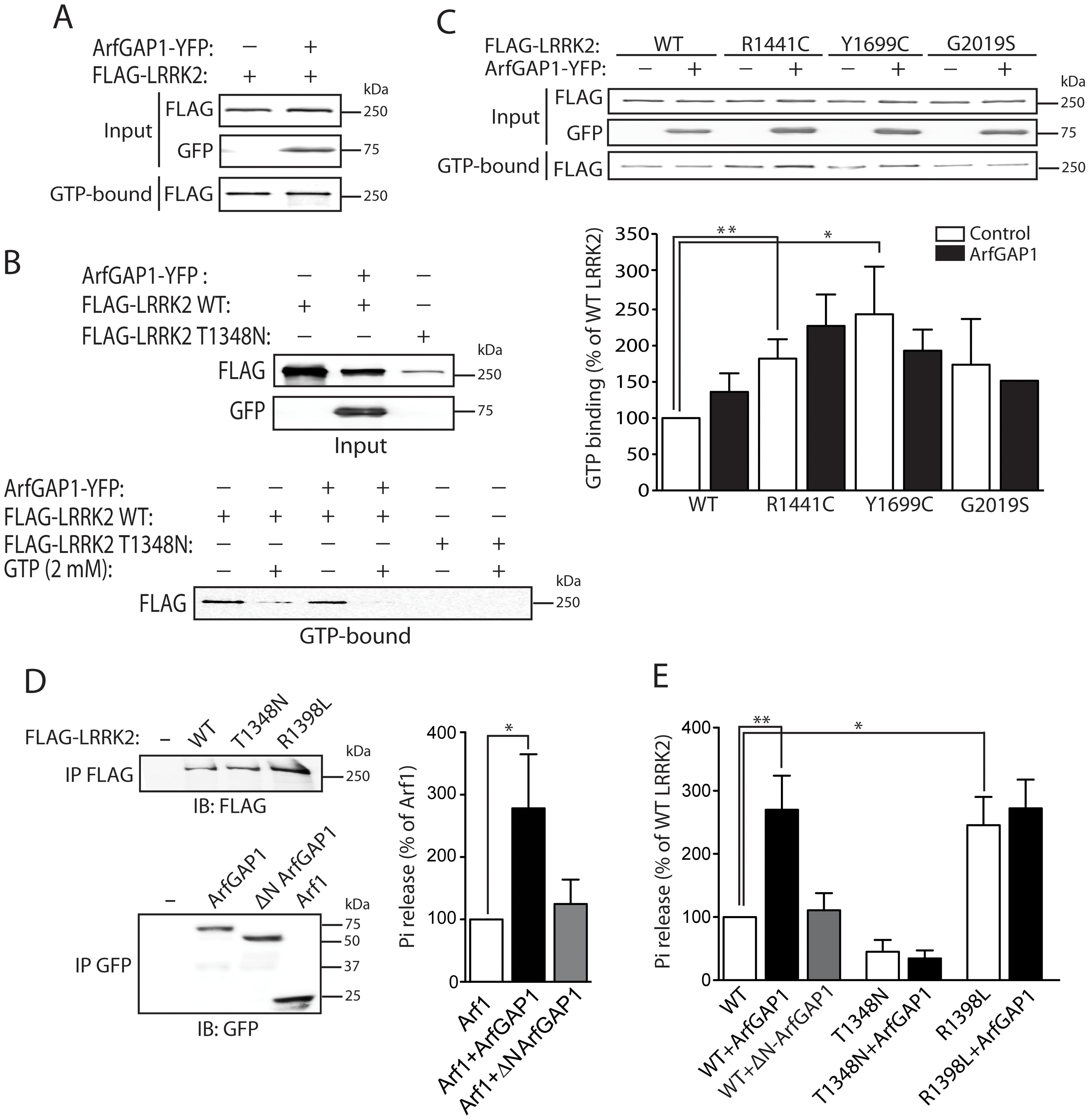 ArfGAP1 enhances the GTP hydrolysis activity of LRRK2.