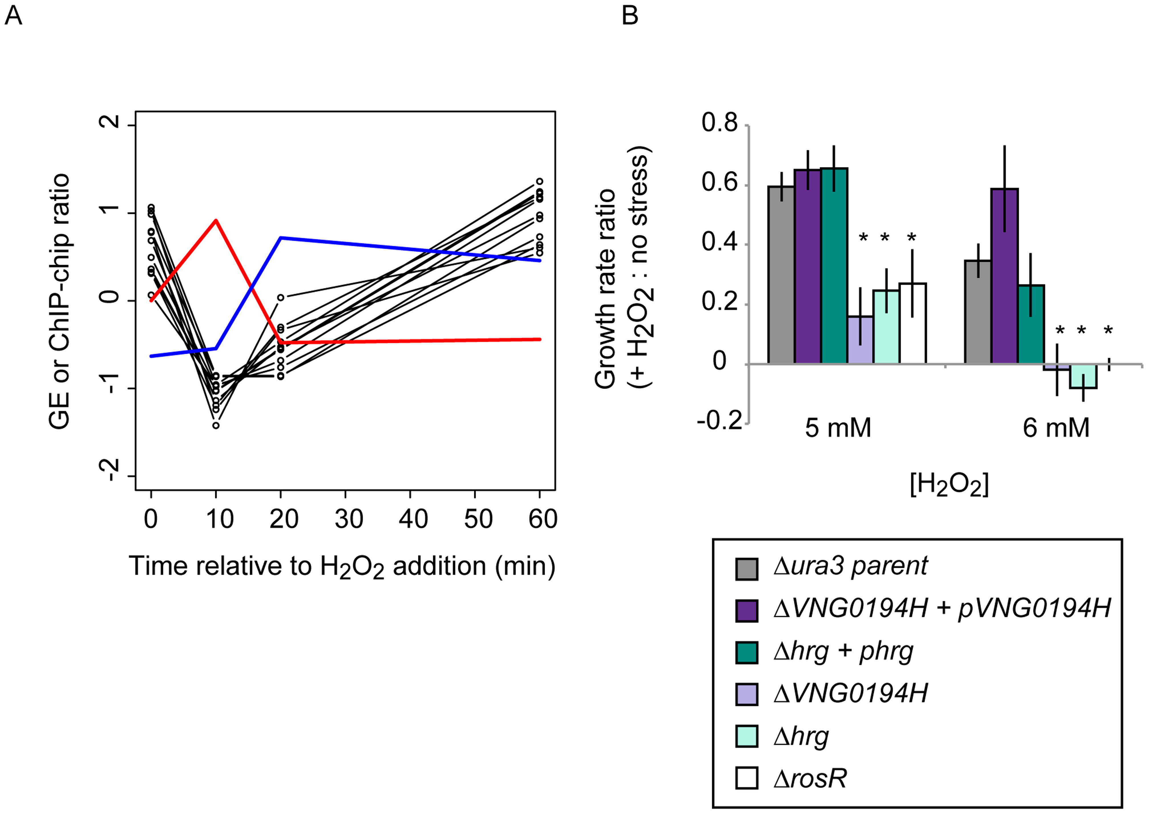 Dynamic RosR regulation of other TFs has functional consequences during ROS stress.